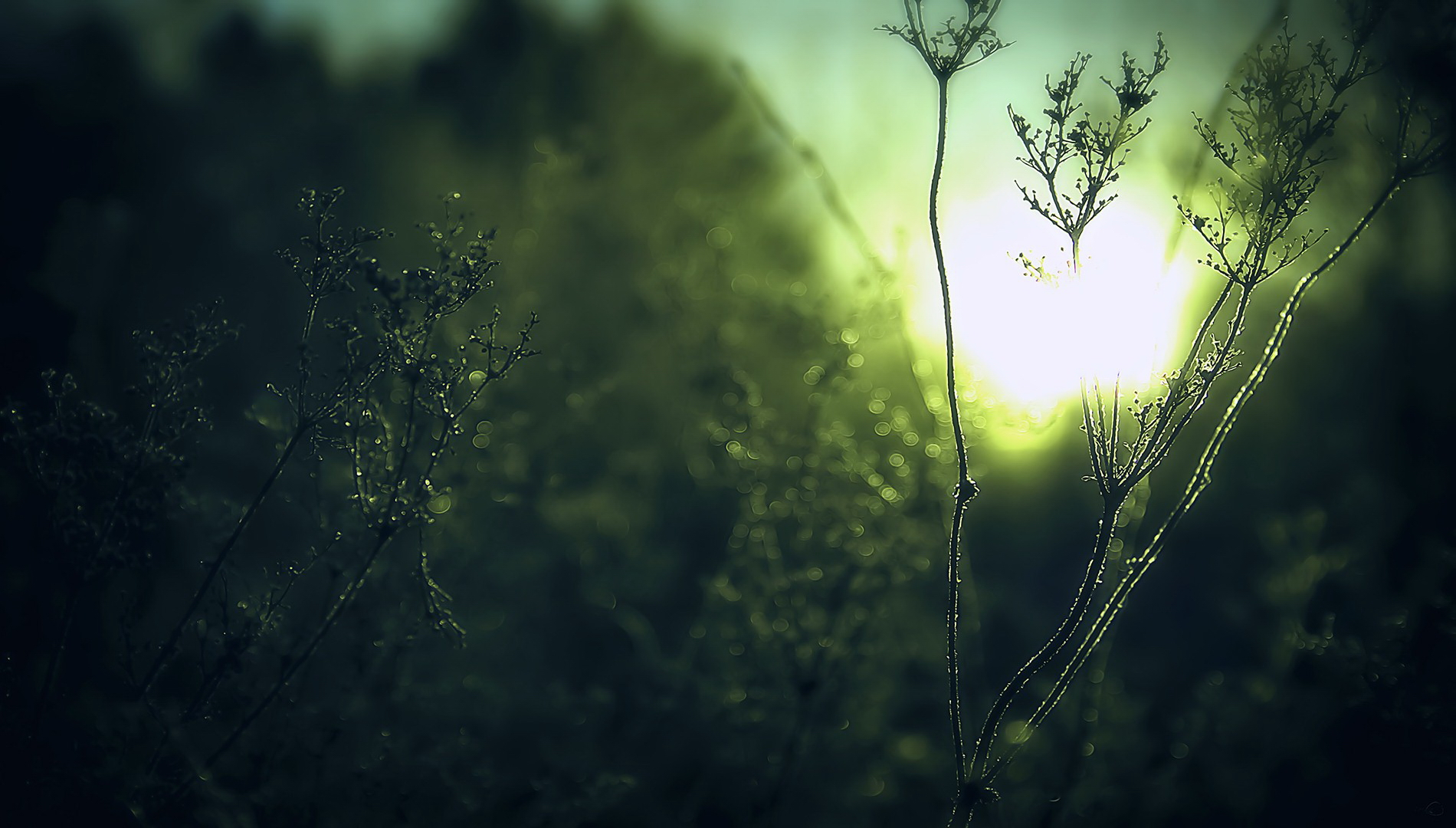 Green blur   Photos and Wallpapers   Pinterest   Blur picture, Free ...