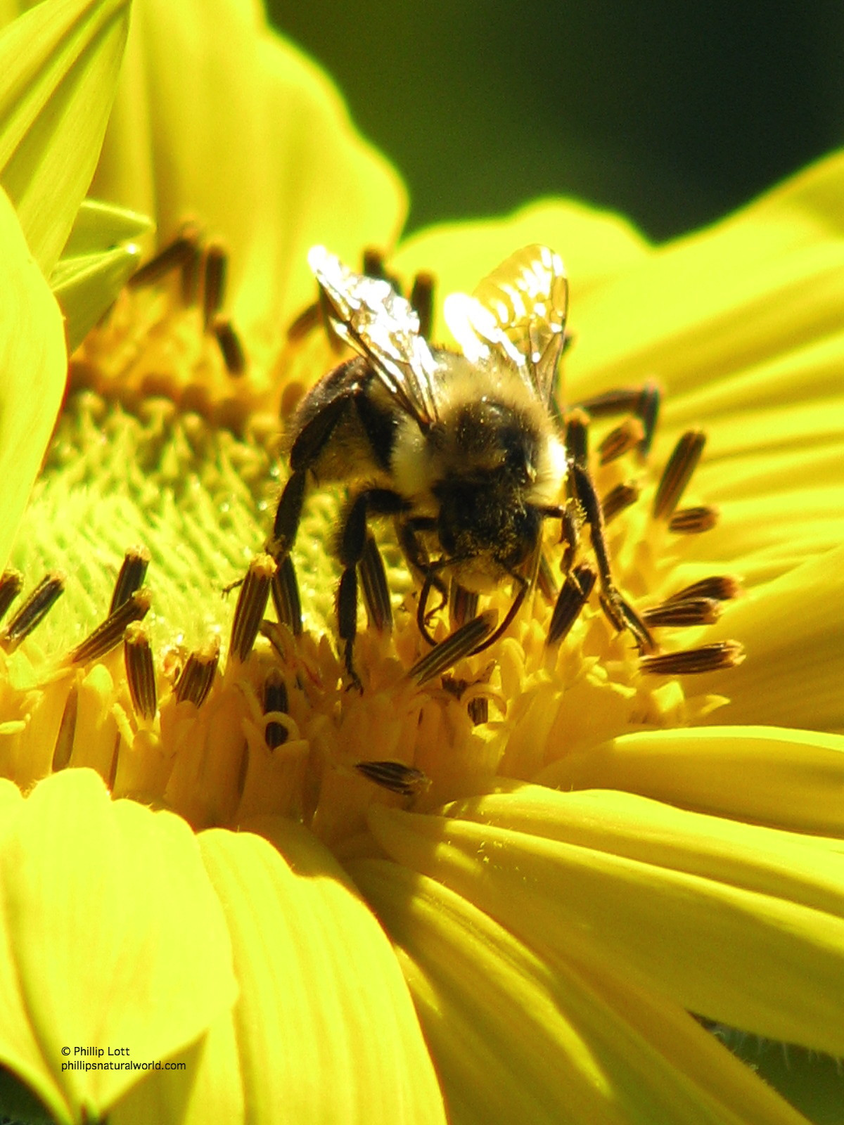 The Secret Life of Bees | Phillip's Natural World