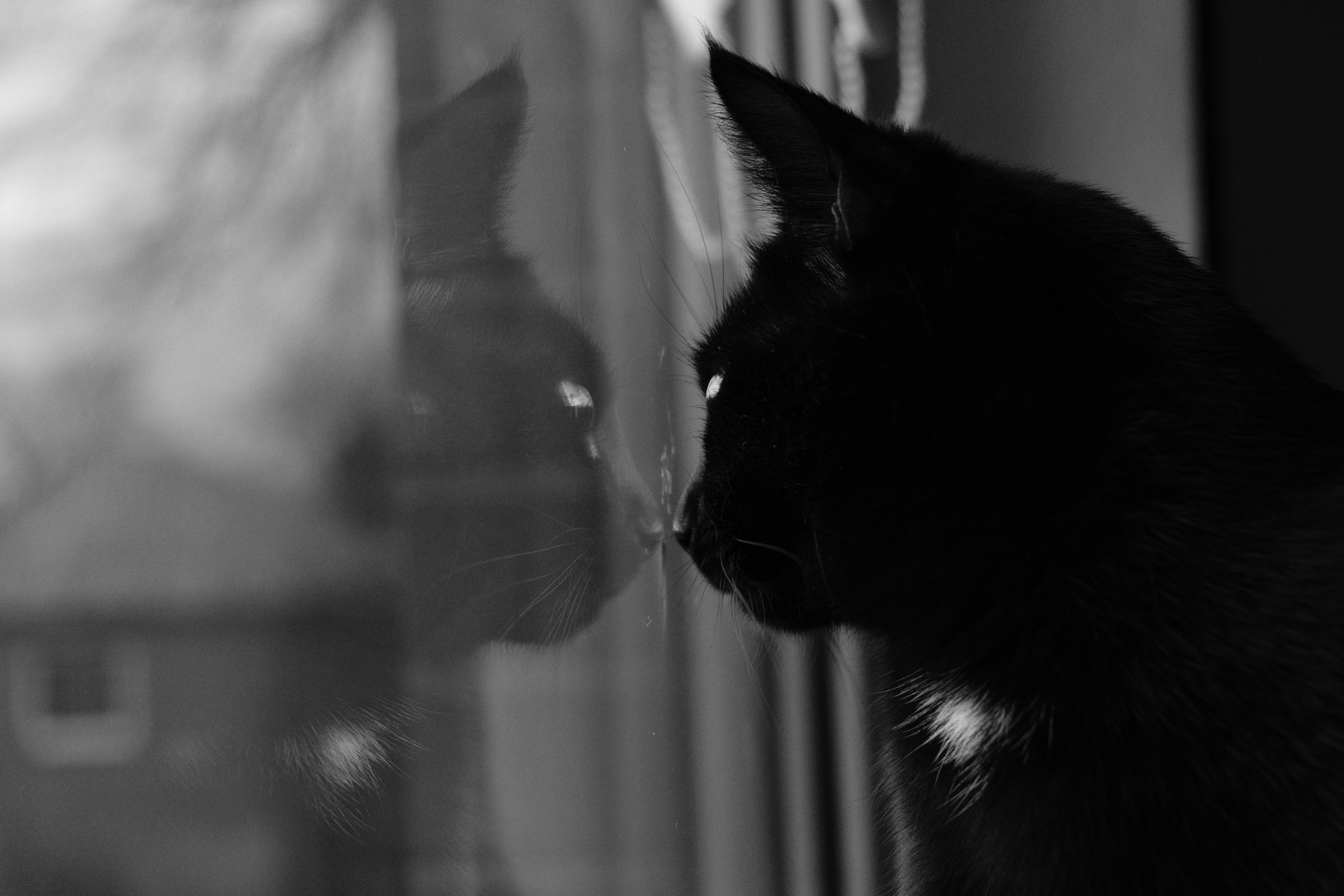 Mipha to the window, Cat, Collar, Reflection, Window, HQ Photo