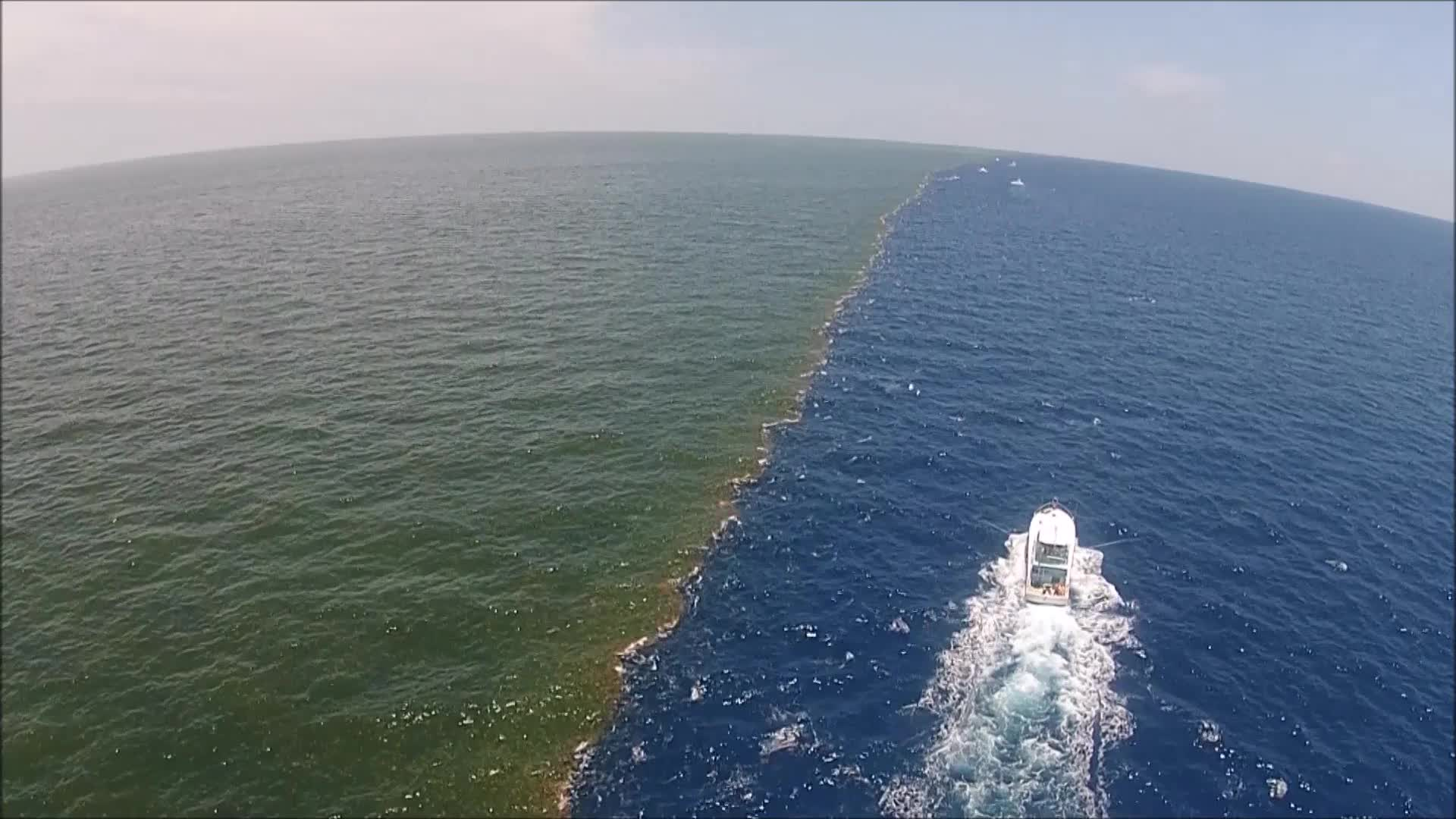 Mississippi River Meets The Gulf of Mexico: NO OXYGEN, NO LIFE: THE ...