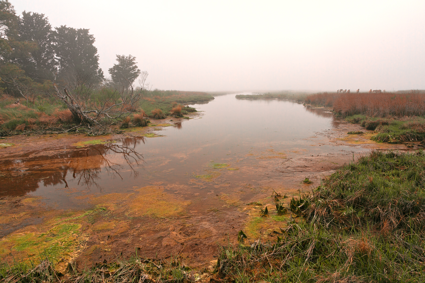 Misty assateague island marsh - hdr photo
