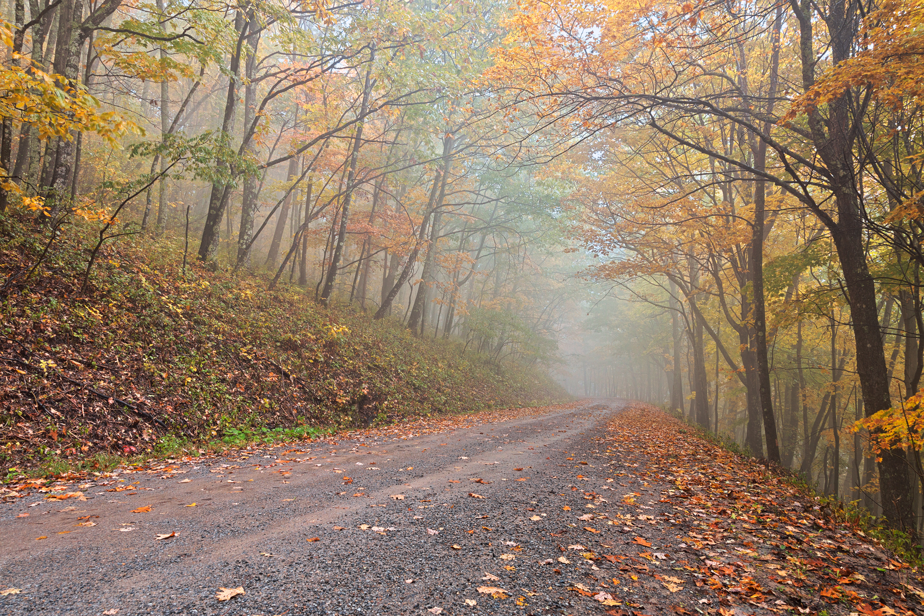Misty Autumn Forest Road - HDR, Adventure, Perspective, Scenery, Scene, HQ Photo