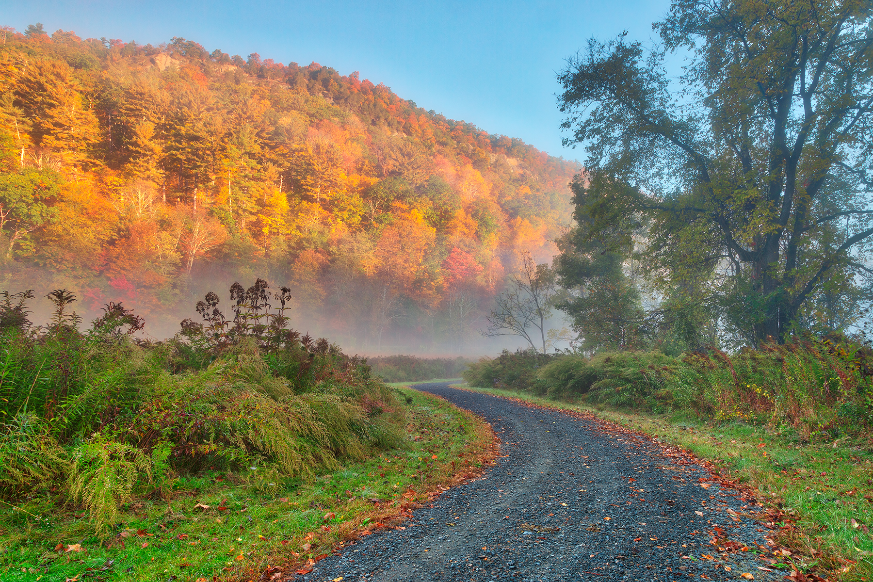 Misty autumn mcdade trail - hdr photo
