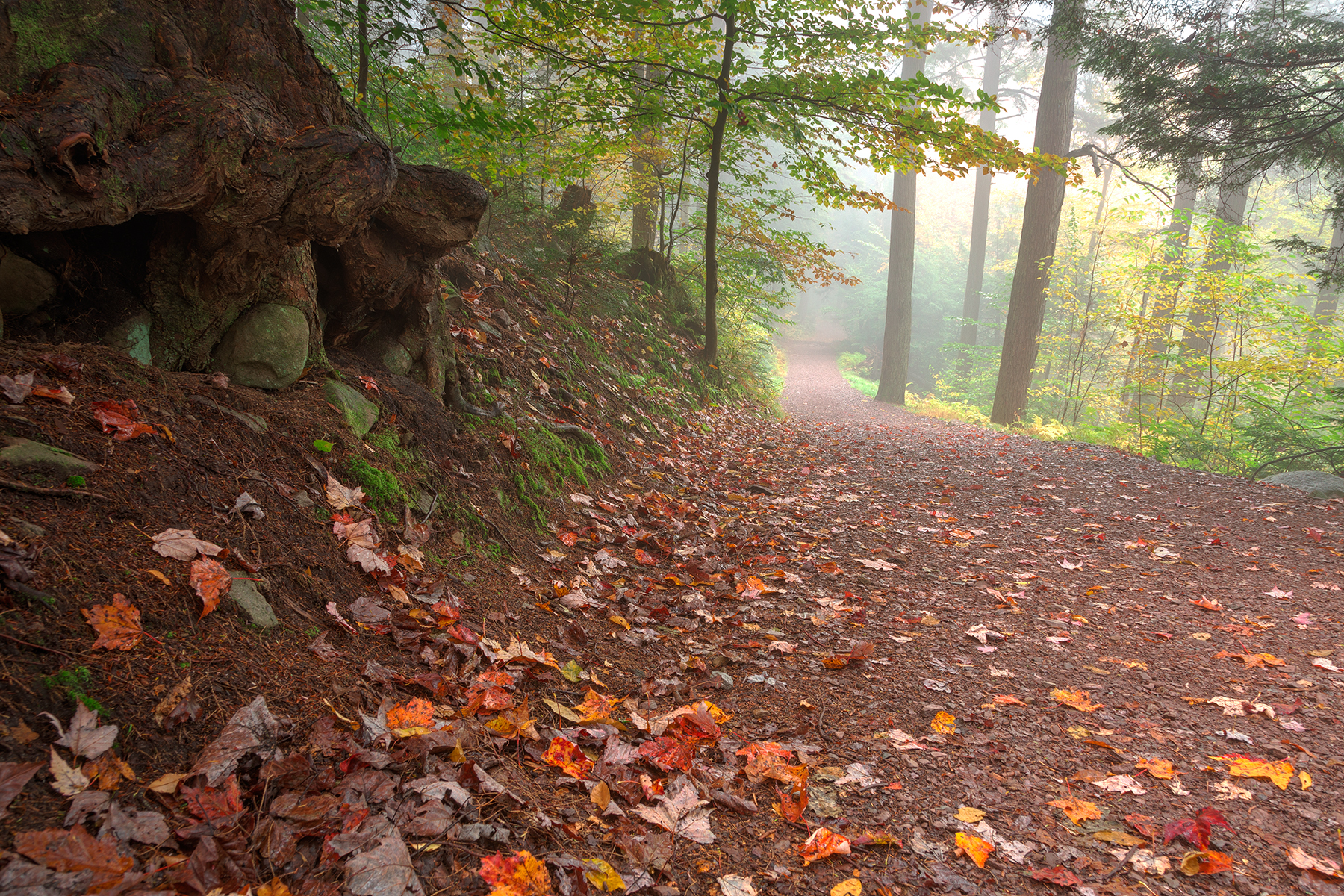 Misty Autumn Trail - HDR, Adventure, Pathway, Scenery, Scene, HQ Photo
