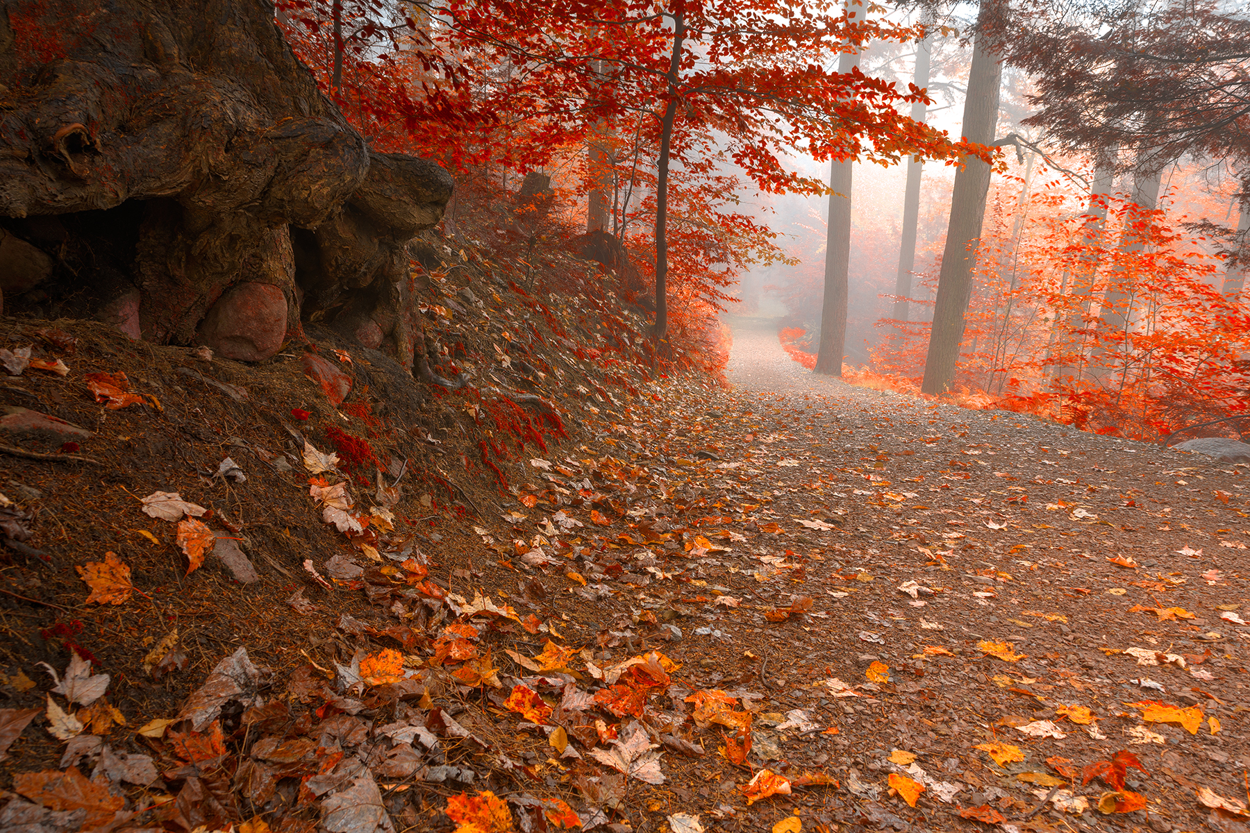 Misty Autumn Wonderland Trail - HDR, Adventure, Park, Recreational, Recreation, HQ Photo