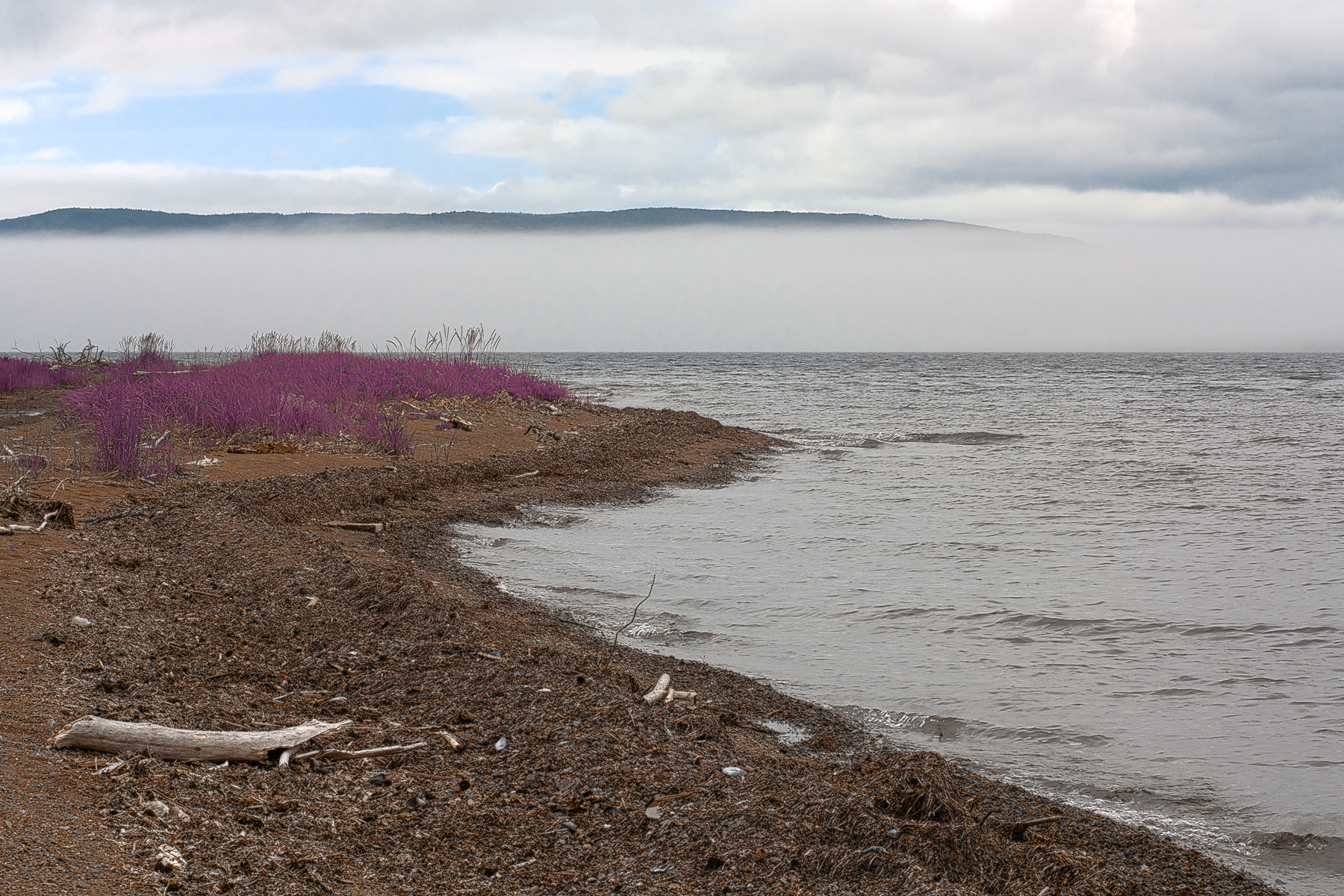 Misty cabot trail scenery - lavender pur photo