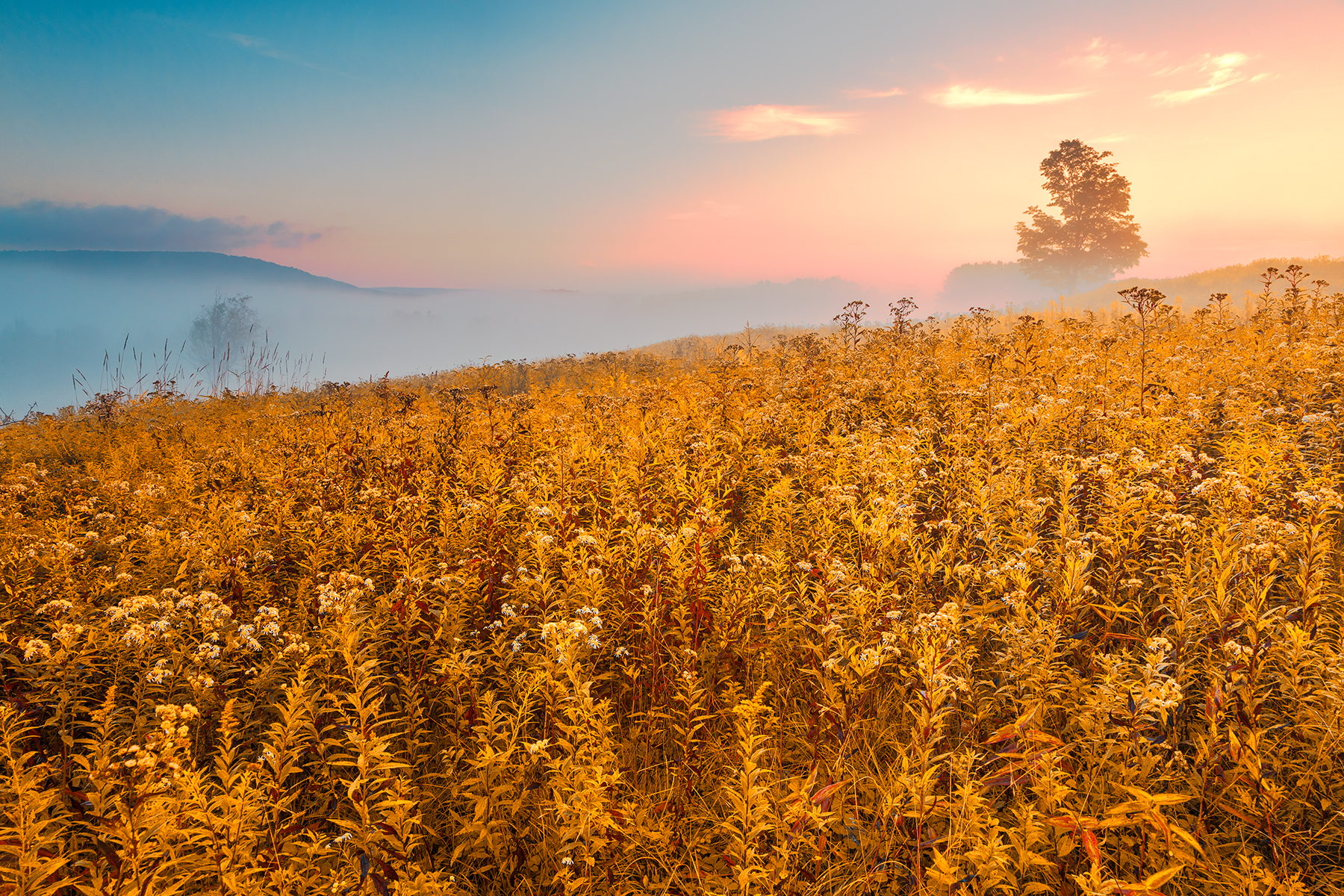 Misty Canaan Valley Sunrise - Gold Pastel Fantasy HDR, Abstract, Peaceful, Serene, Scenic, HQ Photo