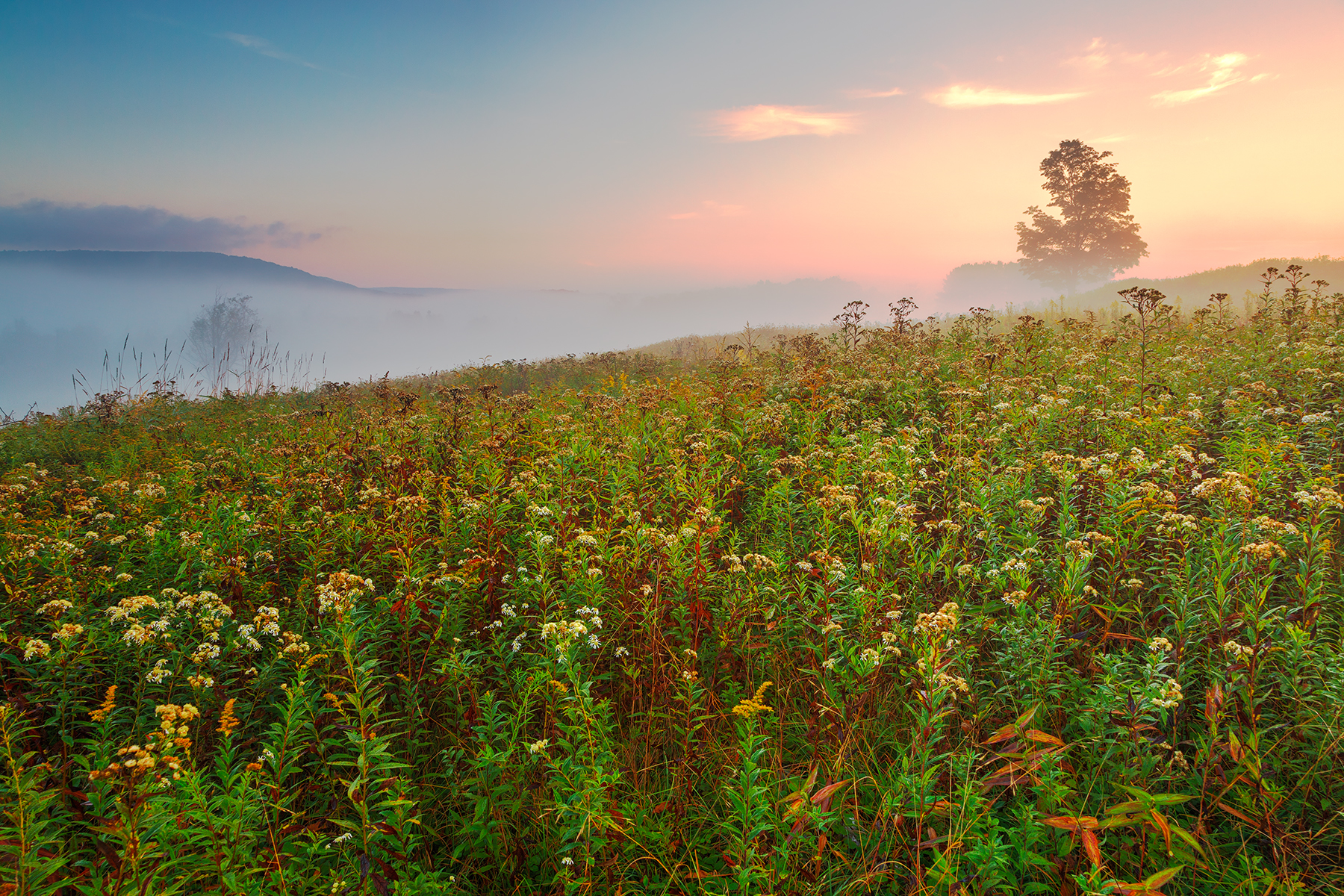 Misty canaan valley sunrise - hdr photo
