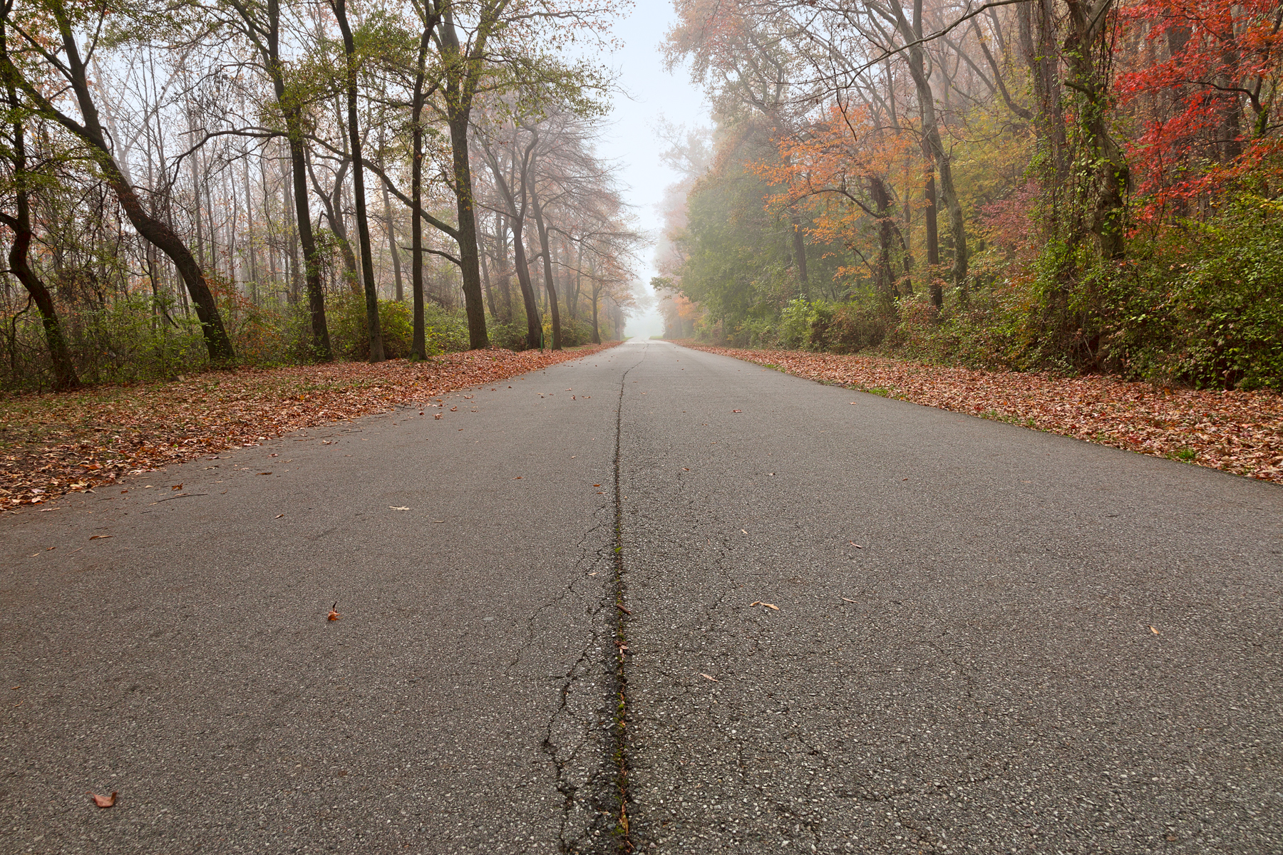 Misty fall road - hdr photo