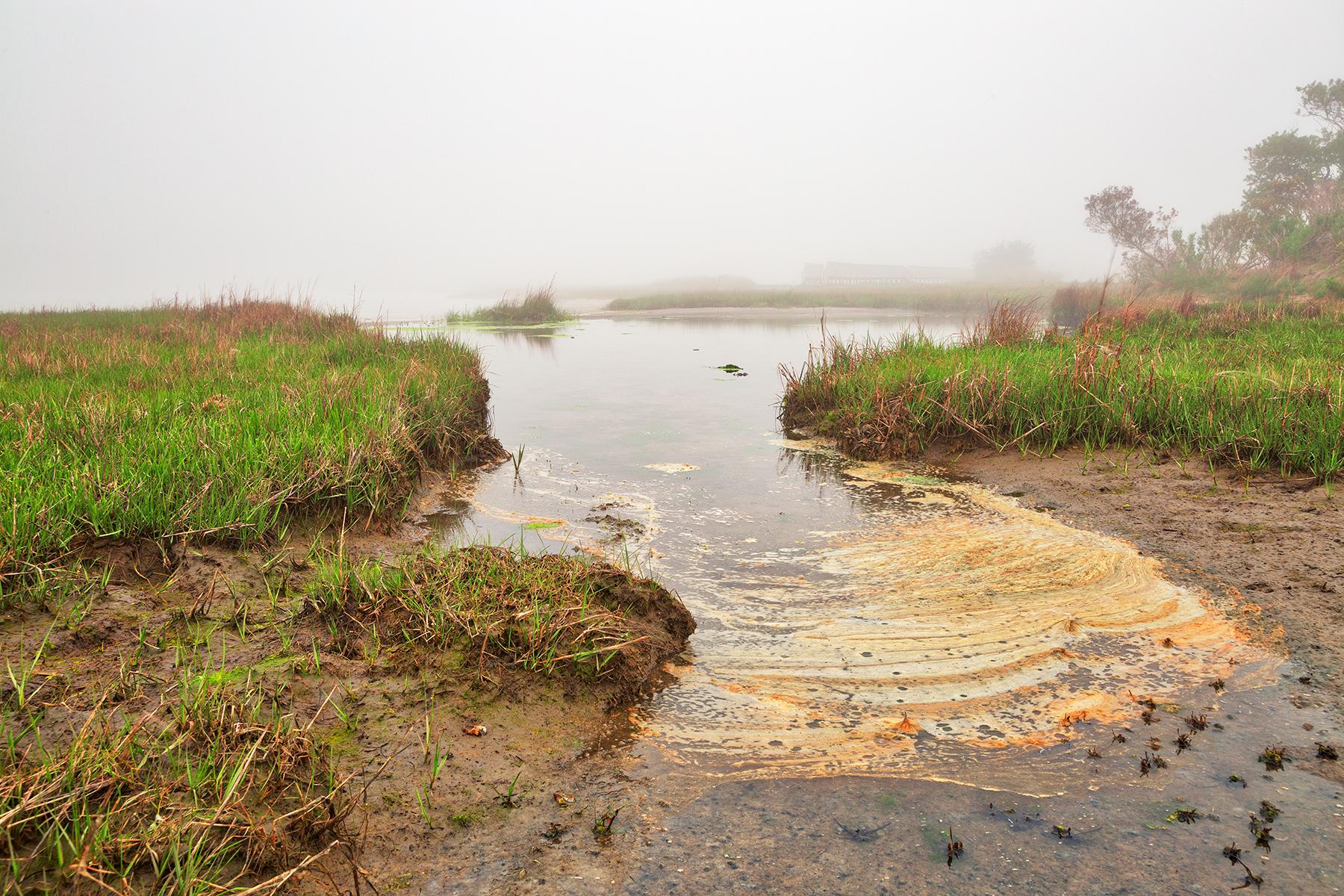 Misty foam marsh - hdr photo