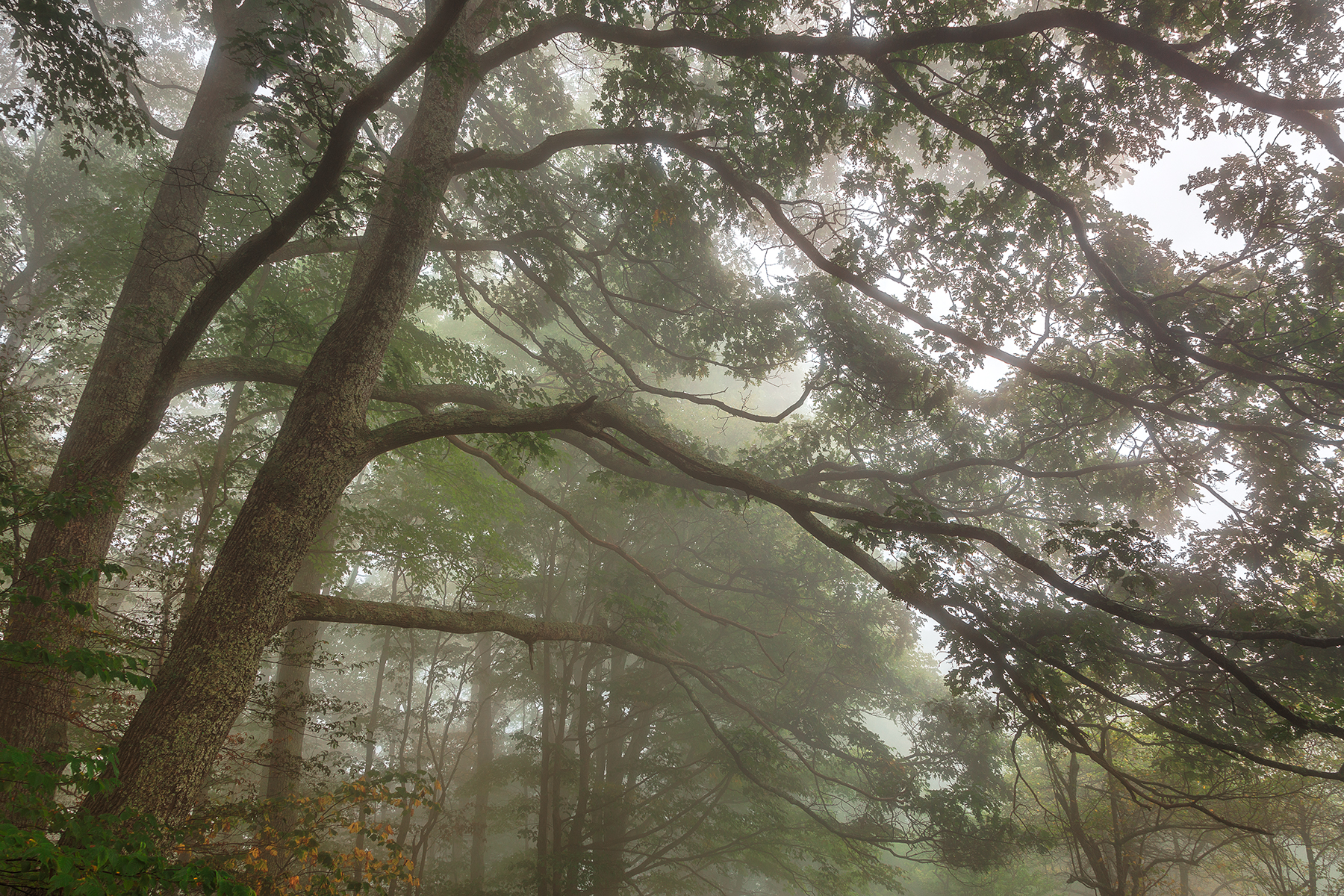 Misty Forest Branchscape - HDR, America, Plant, Sky, Shadows, HQ Photo