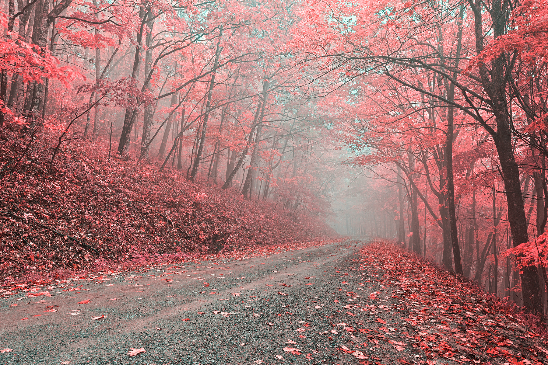 Misty forest road - tickle me pink hdr photo