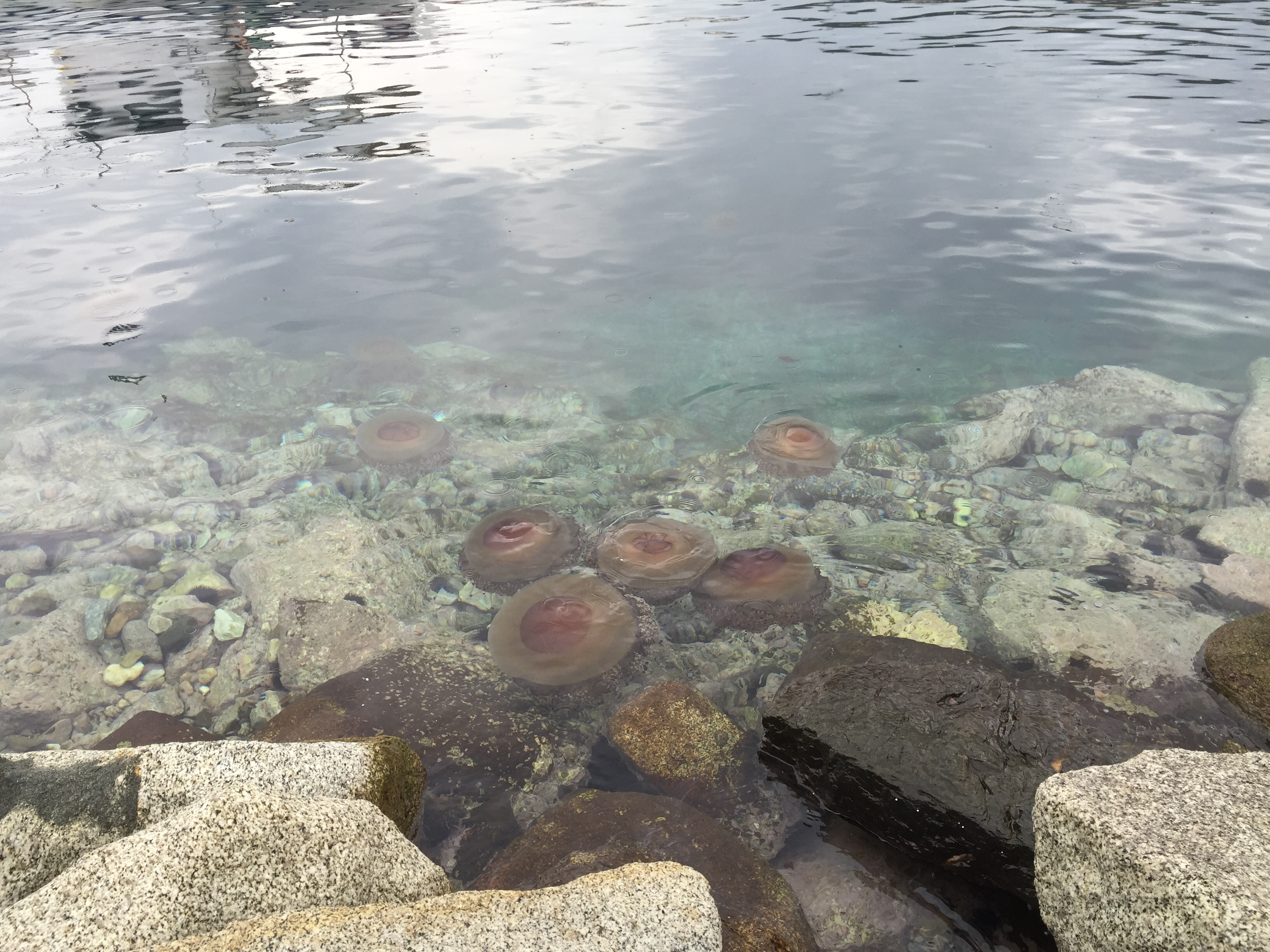 Mix Of Relaxed Jellies, Boulders, Outdoor, Underwater, Tranquility, HQ Photo