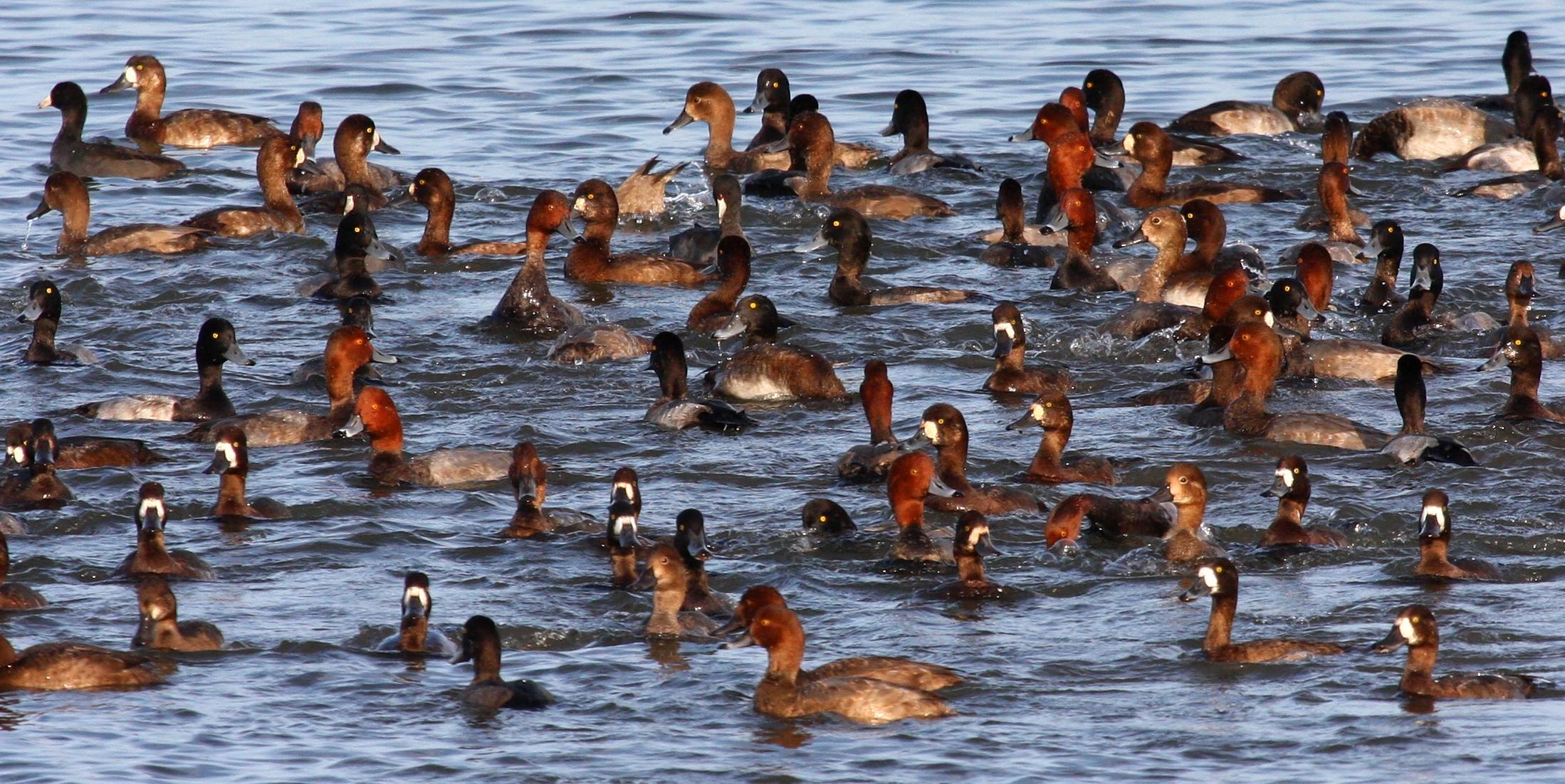 Hotspot -- Lower Mud Lake - Wisconsin eBird
