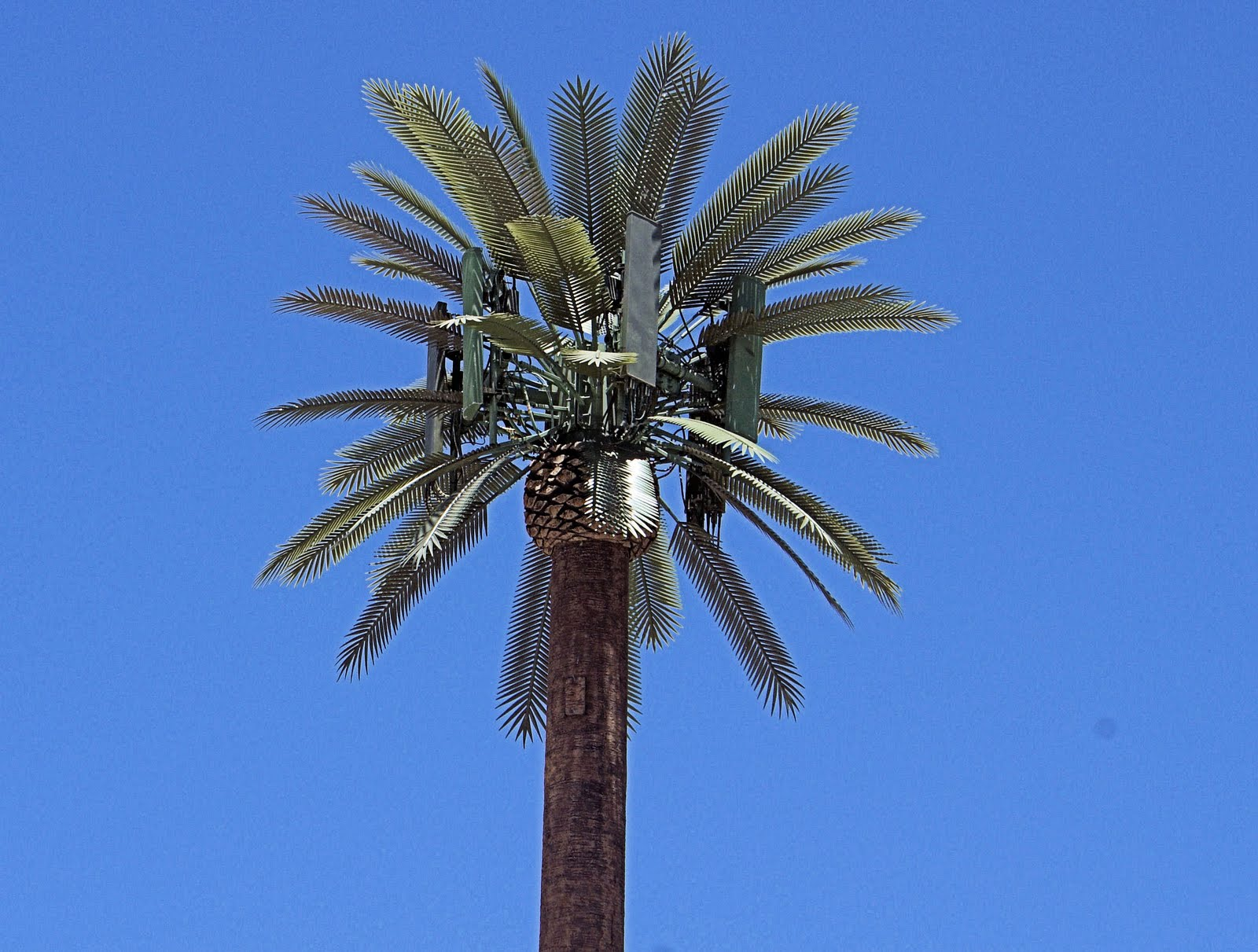 Fake palm tree mobile phone masts |