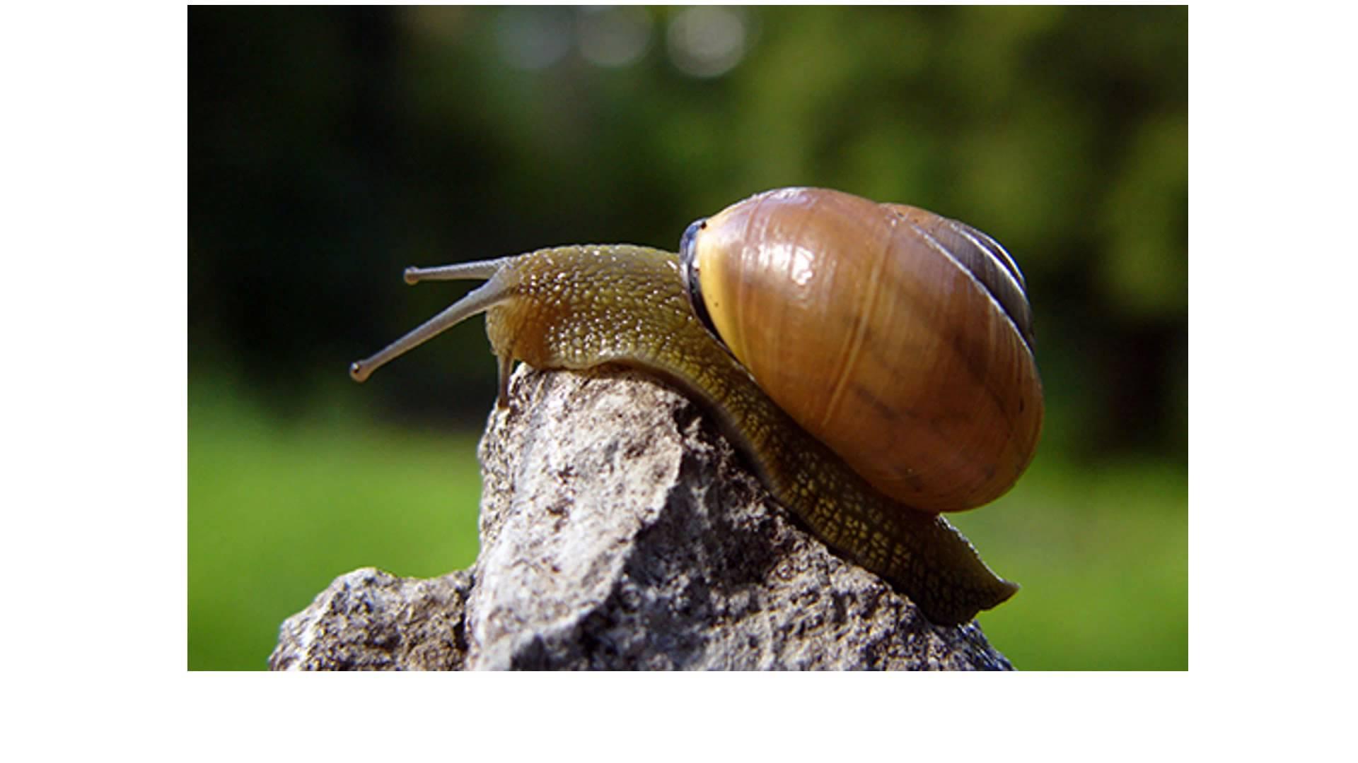 Molluska