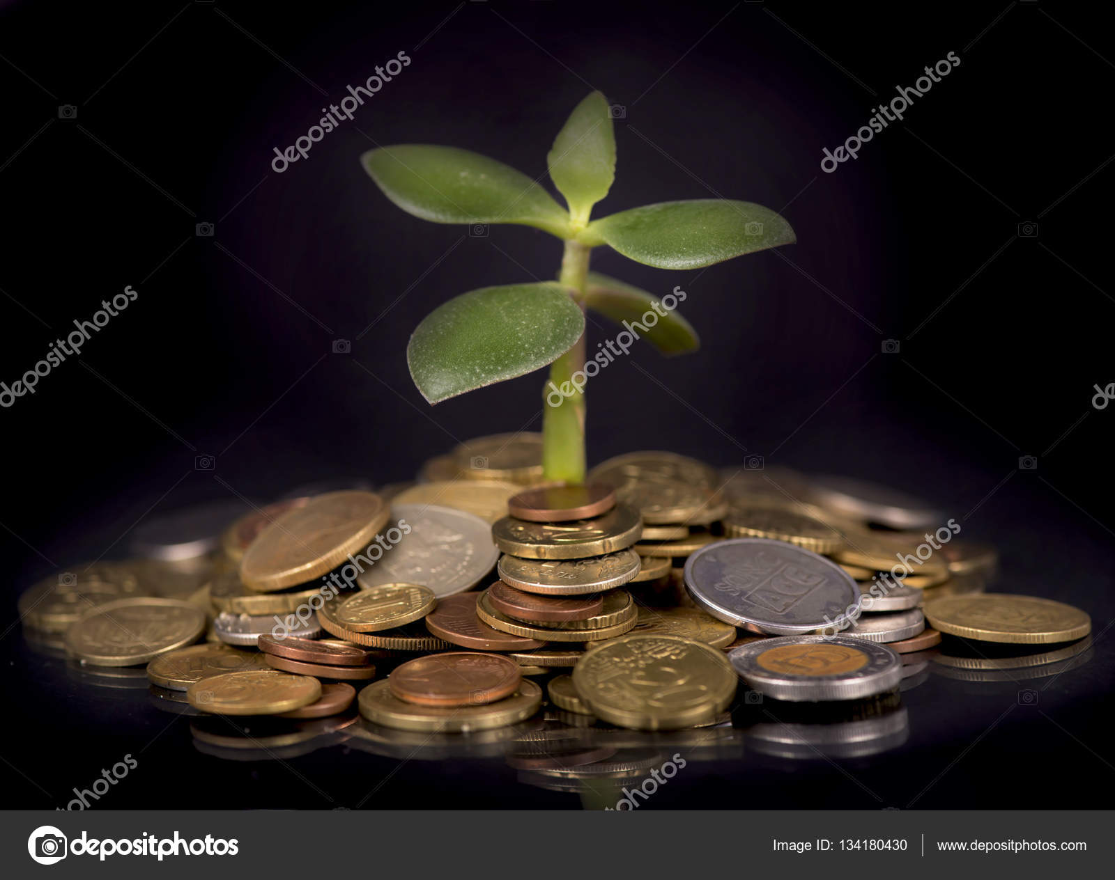 Money growth concept - coins in the soil photo