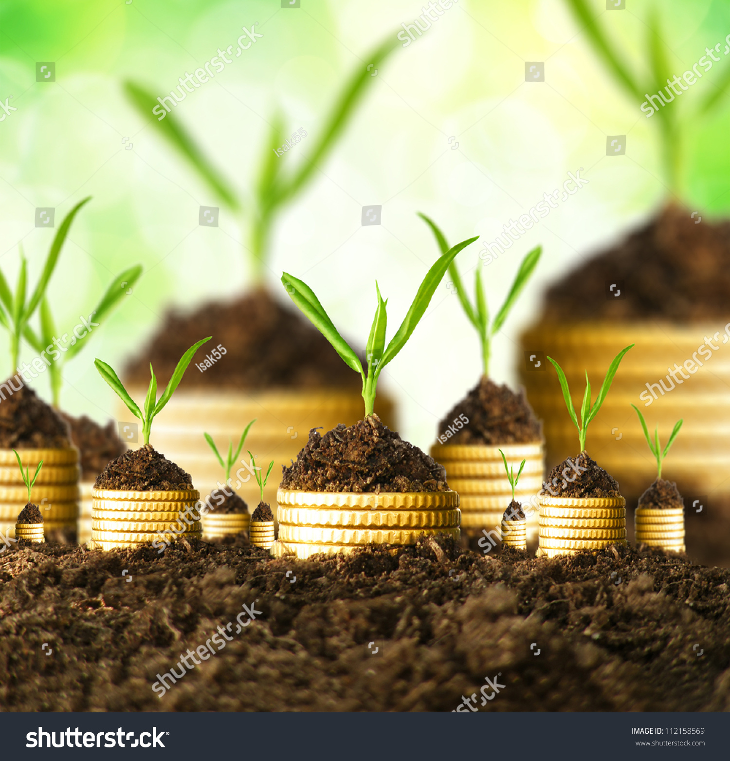 Golden Coins Soil Young Plant Money Stock Photo 112158569 - Shutterstock