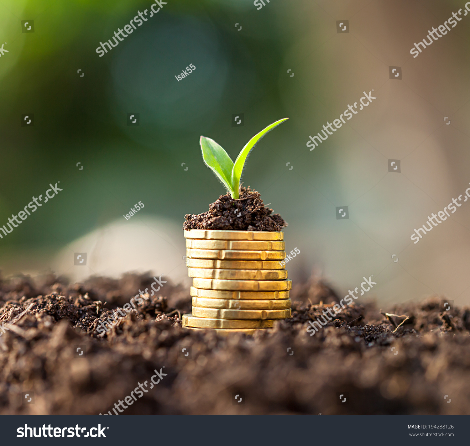 Golden Coins Soil Young Plant Money Stock Photo 194288126 - Shutterstock