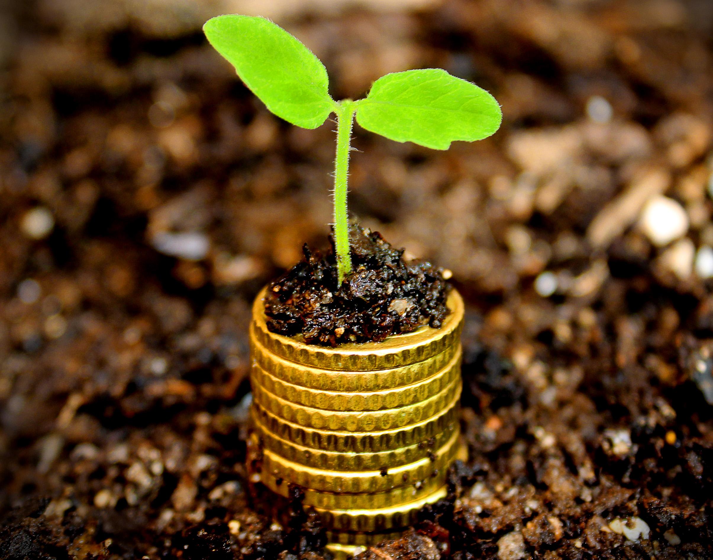 Money growth concept - Coins in the soil, Account, Money, Platform, Plant, HQ Photo