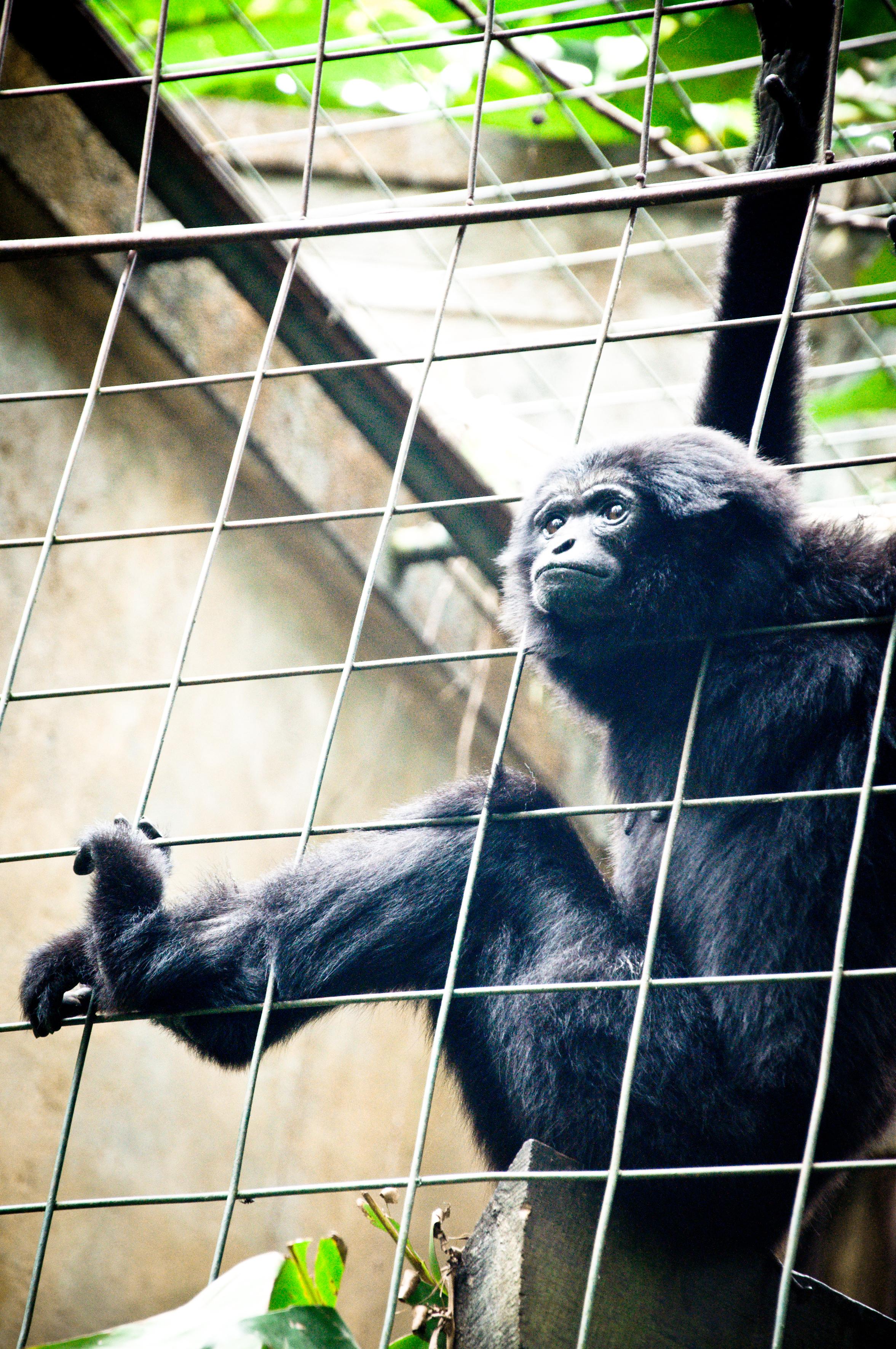 Monkey, Africa, Safari, Little, Mammal, HQ Photo
