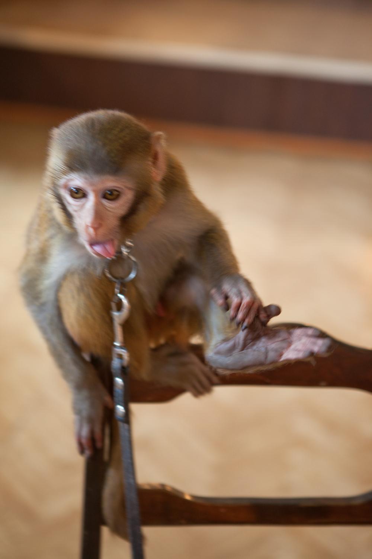 monkey, Animal, Sitting, Primate, One, HQ Photo