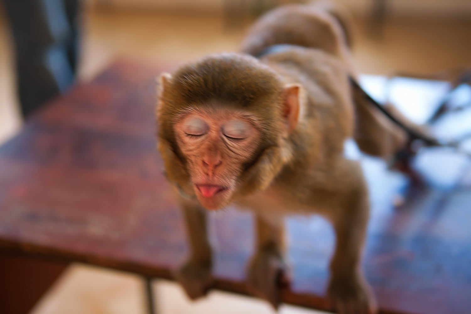 monkey, Adorable, Image, Young, Tongue, HQ Photo