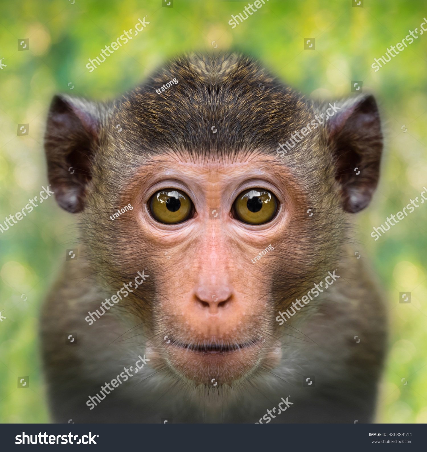 Funny Monkey Face Close Big Eyes Stock Photo (100% Legal Protection ...