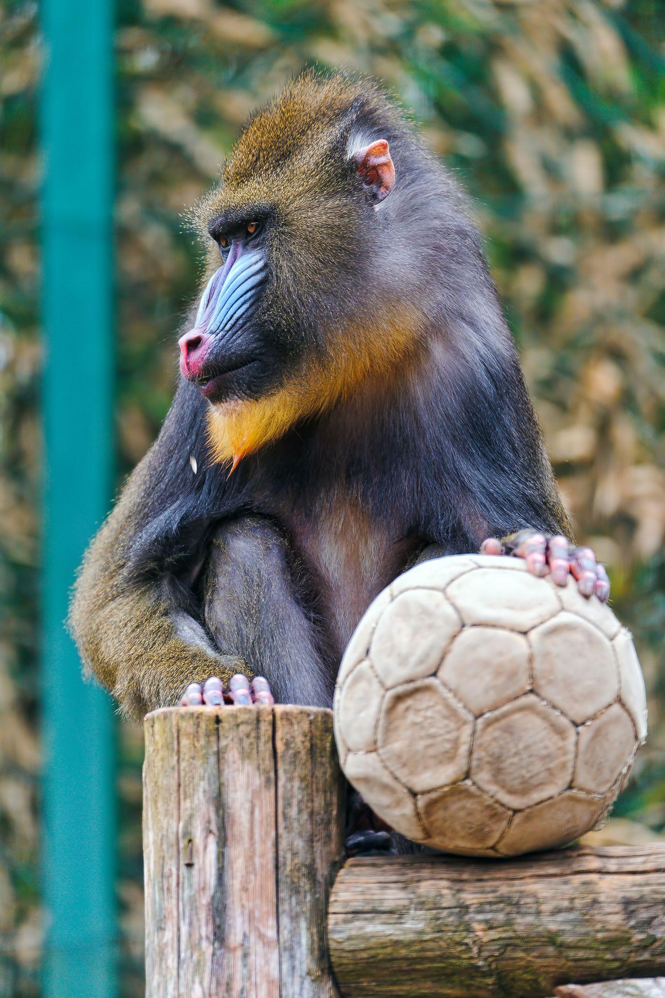 Monkey posing photo