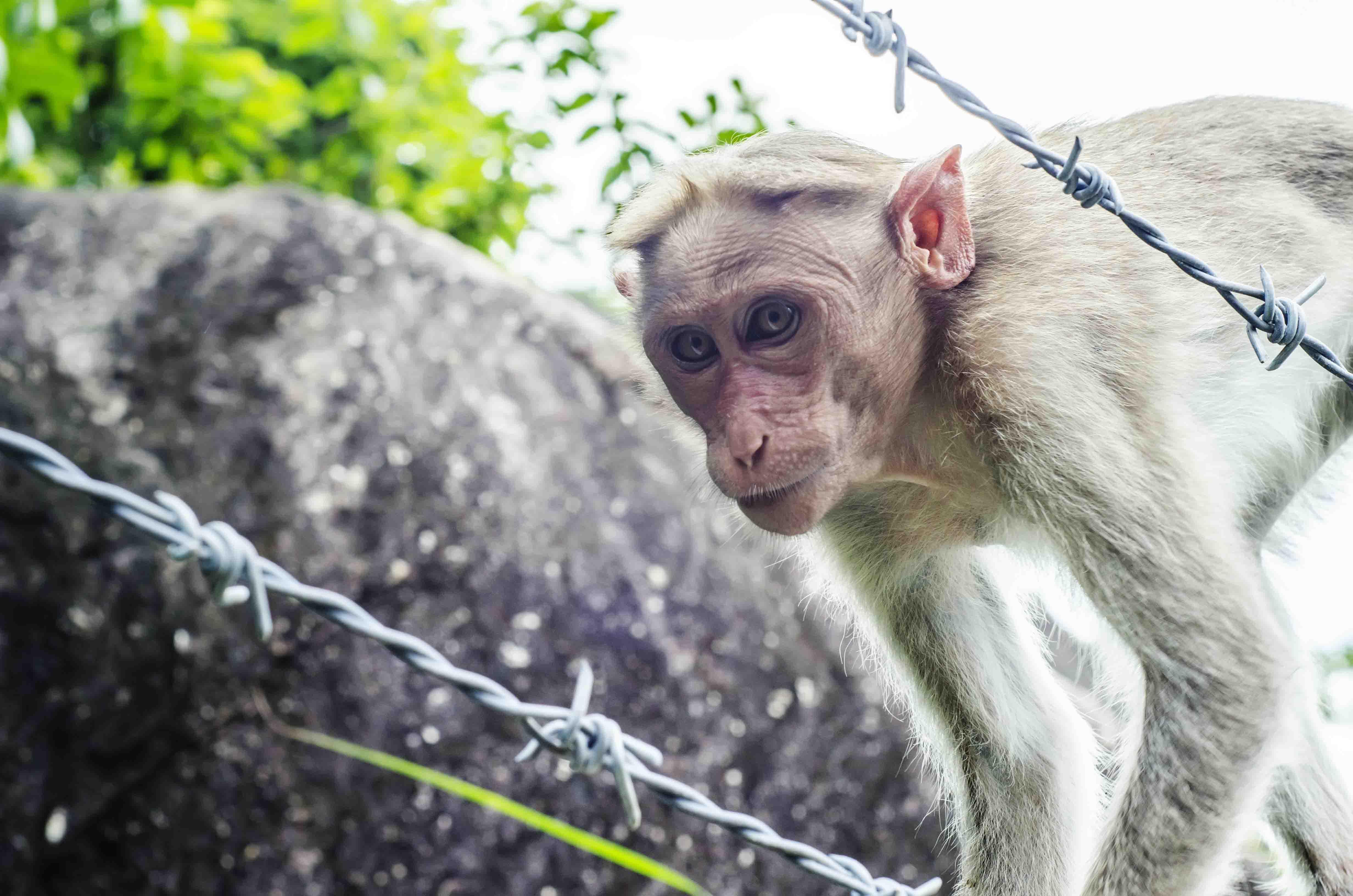Monkey posing