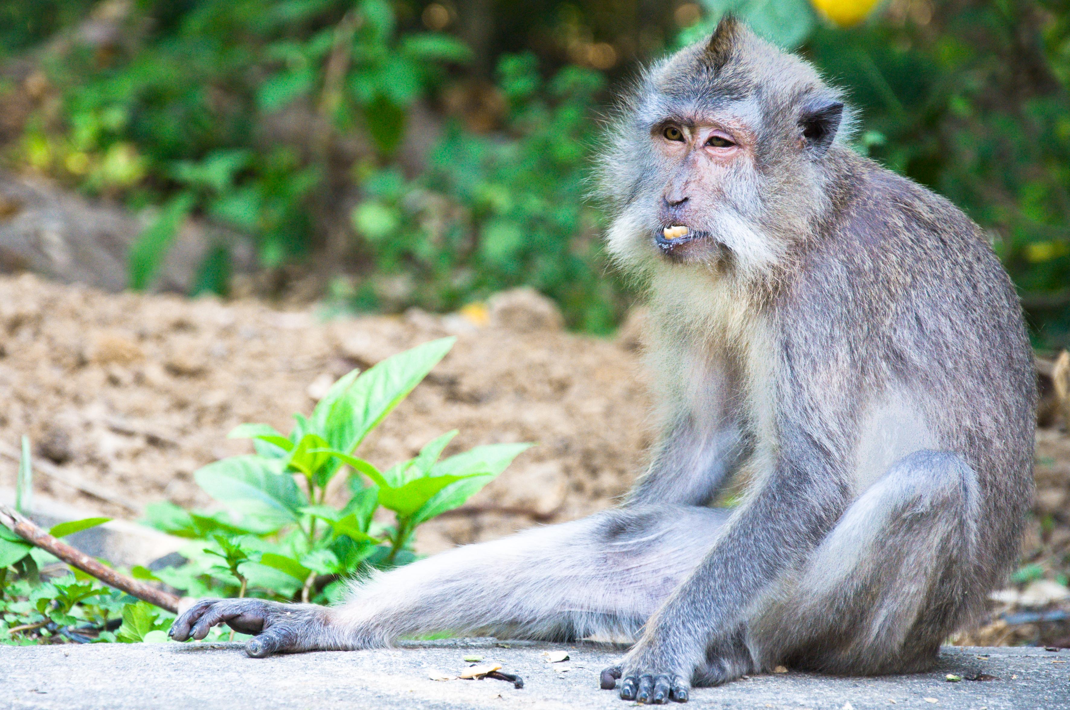Monkey photo