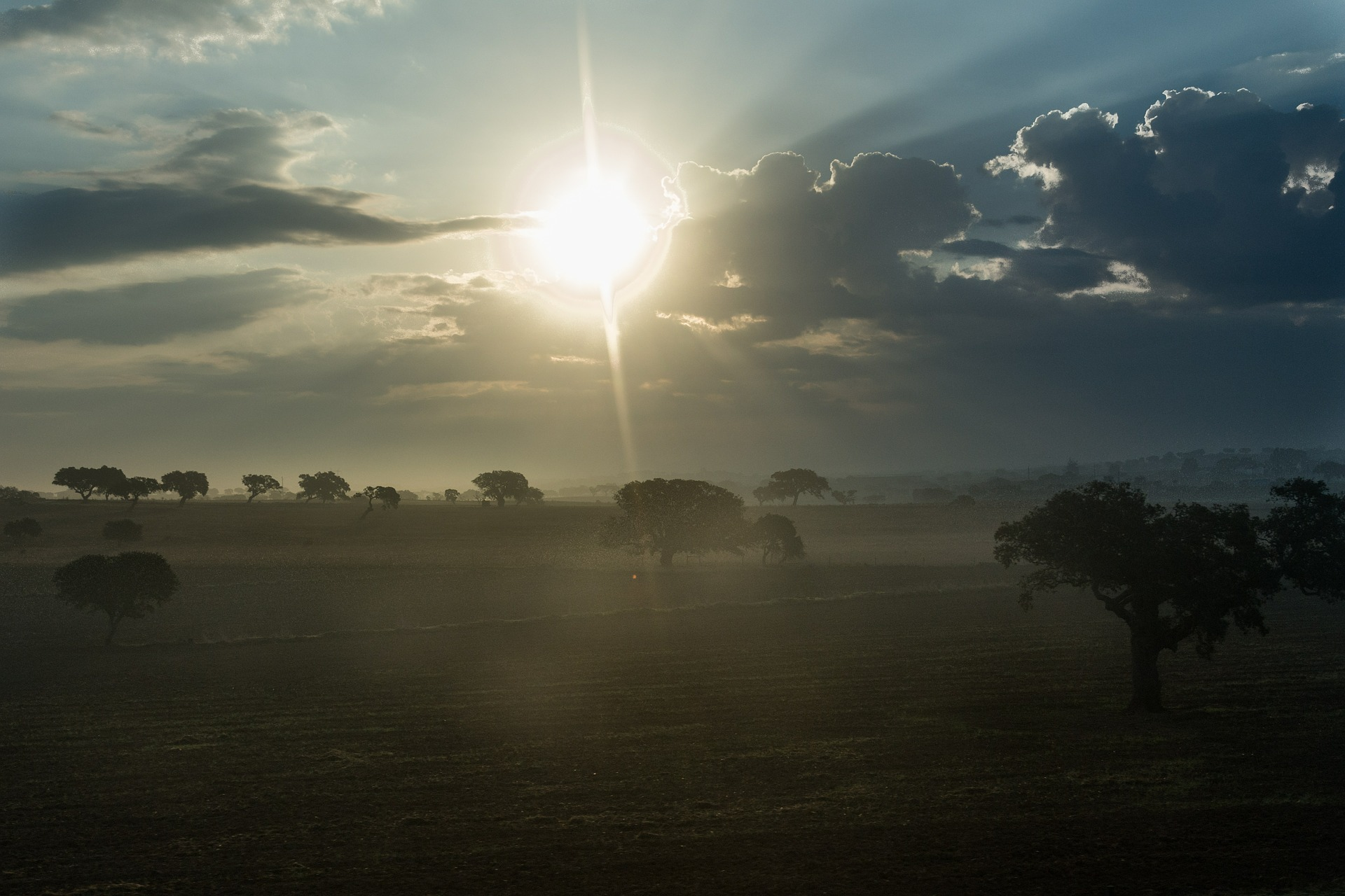 Morning in the field photo