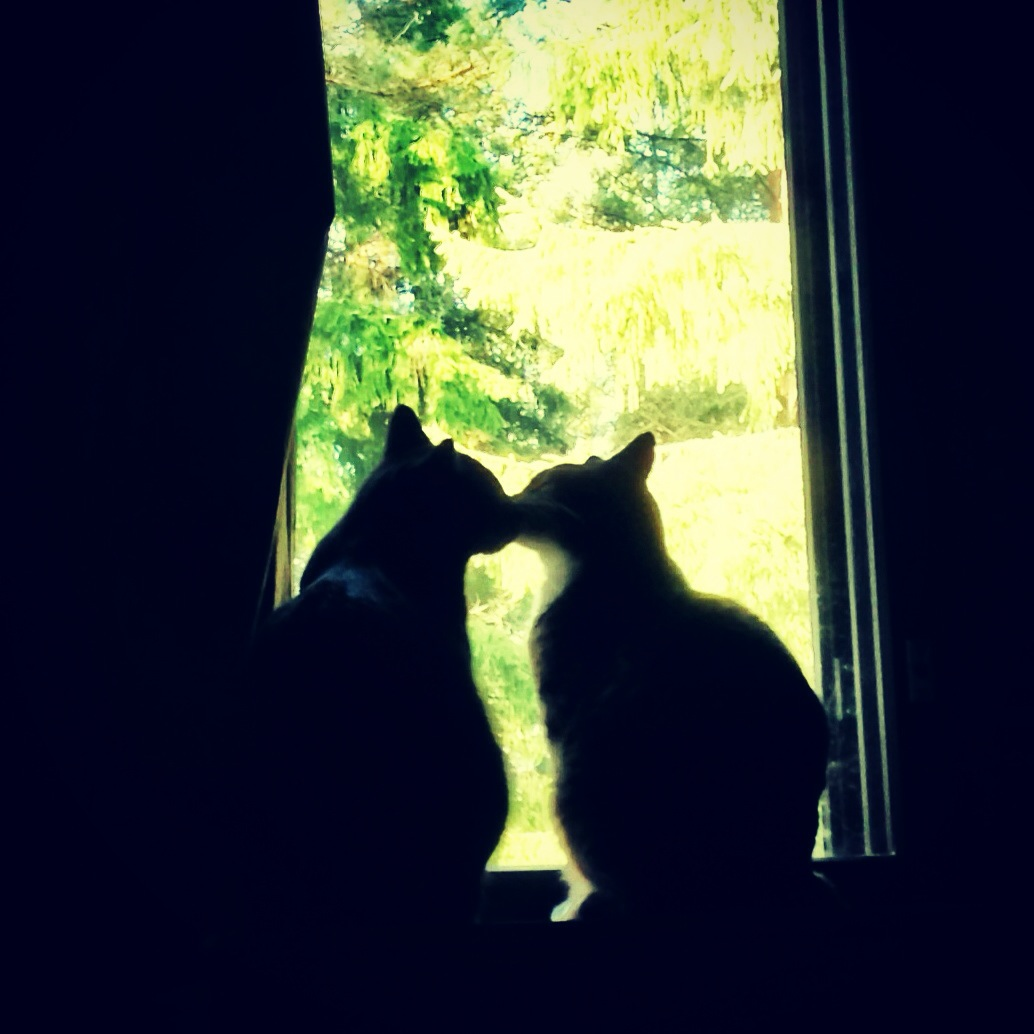 Morning Kiss, Cats, Cute, Kissing, Pets, HQ Photo