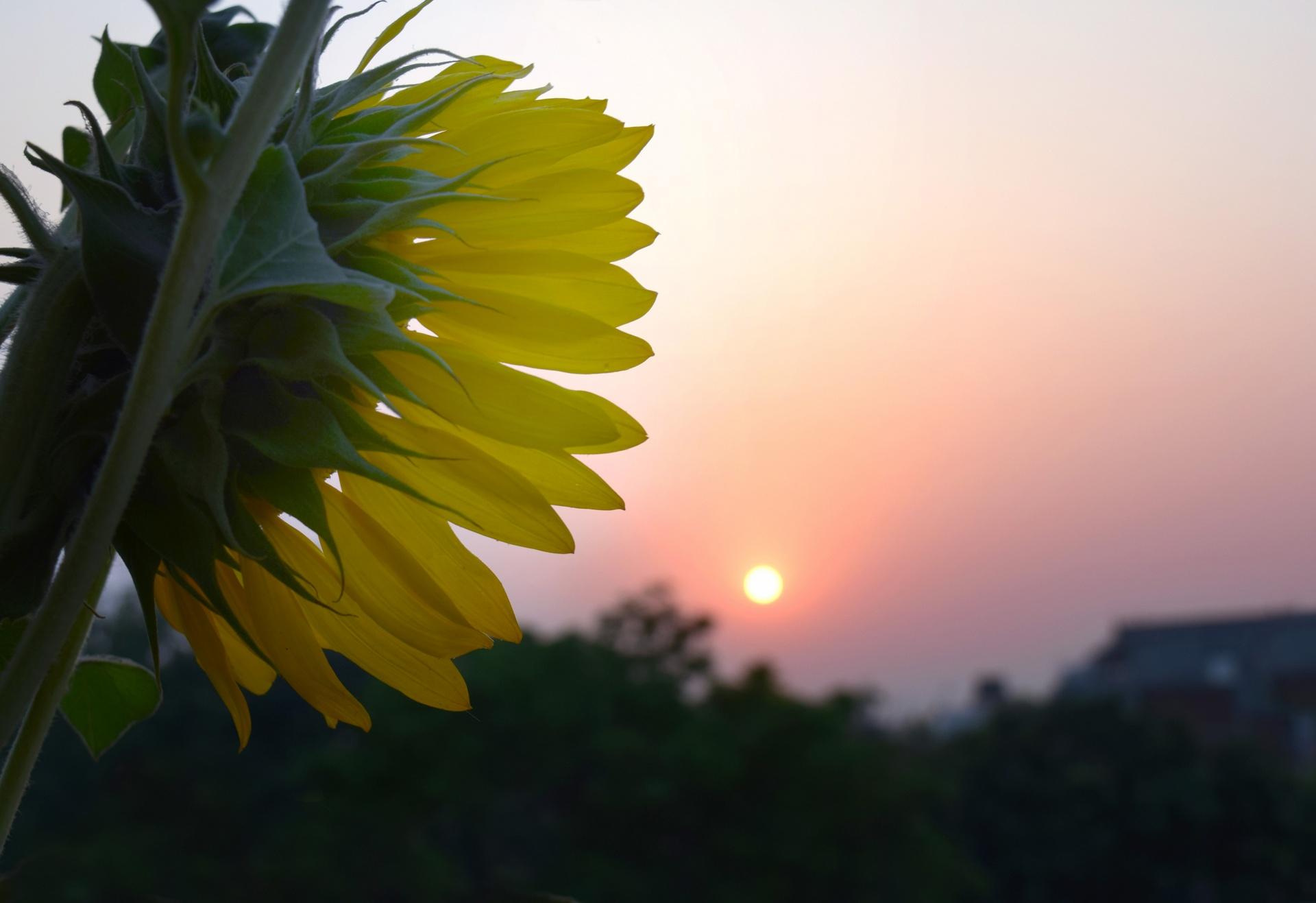 Morning sun photo