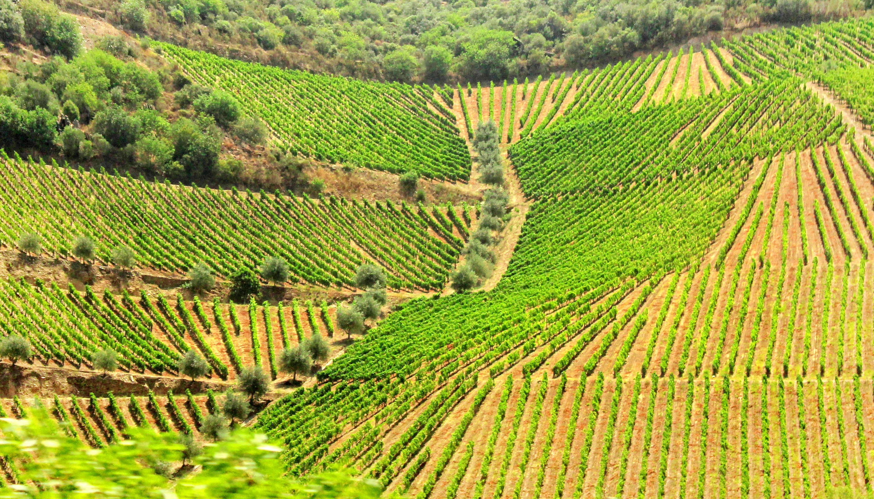 Mosaic of Vineyards and Olive Tree Groves - Douro Valley, Agriculture, Port, Scenery, Sandeman, HQ Photo
