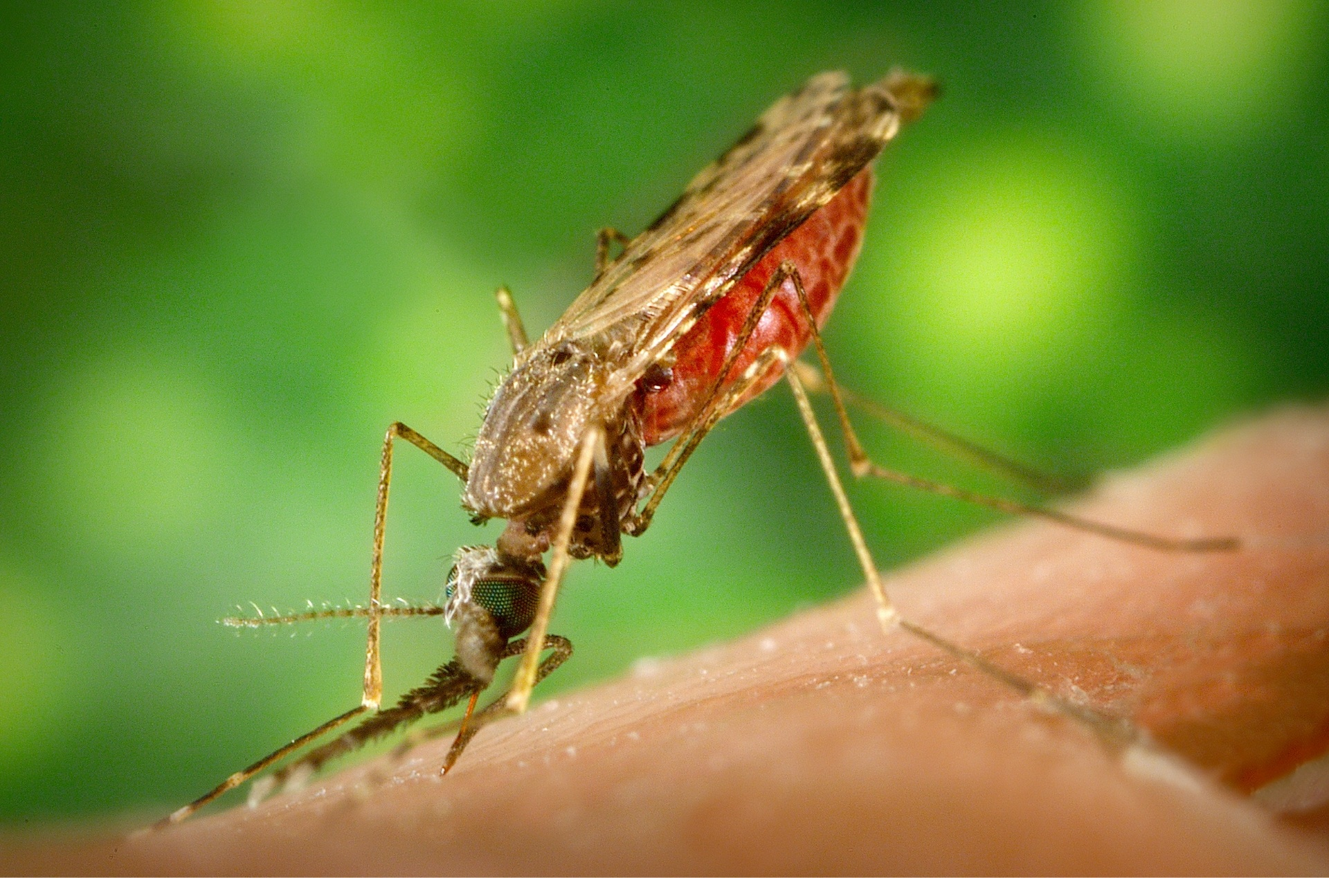 Mosquito Bite, Animal, Bite, Biting, Insect, HQ Photo