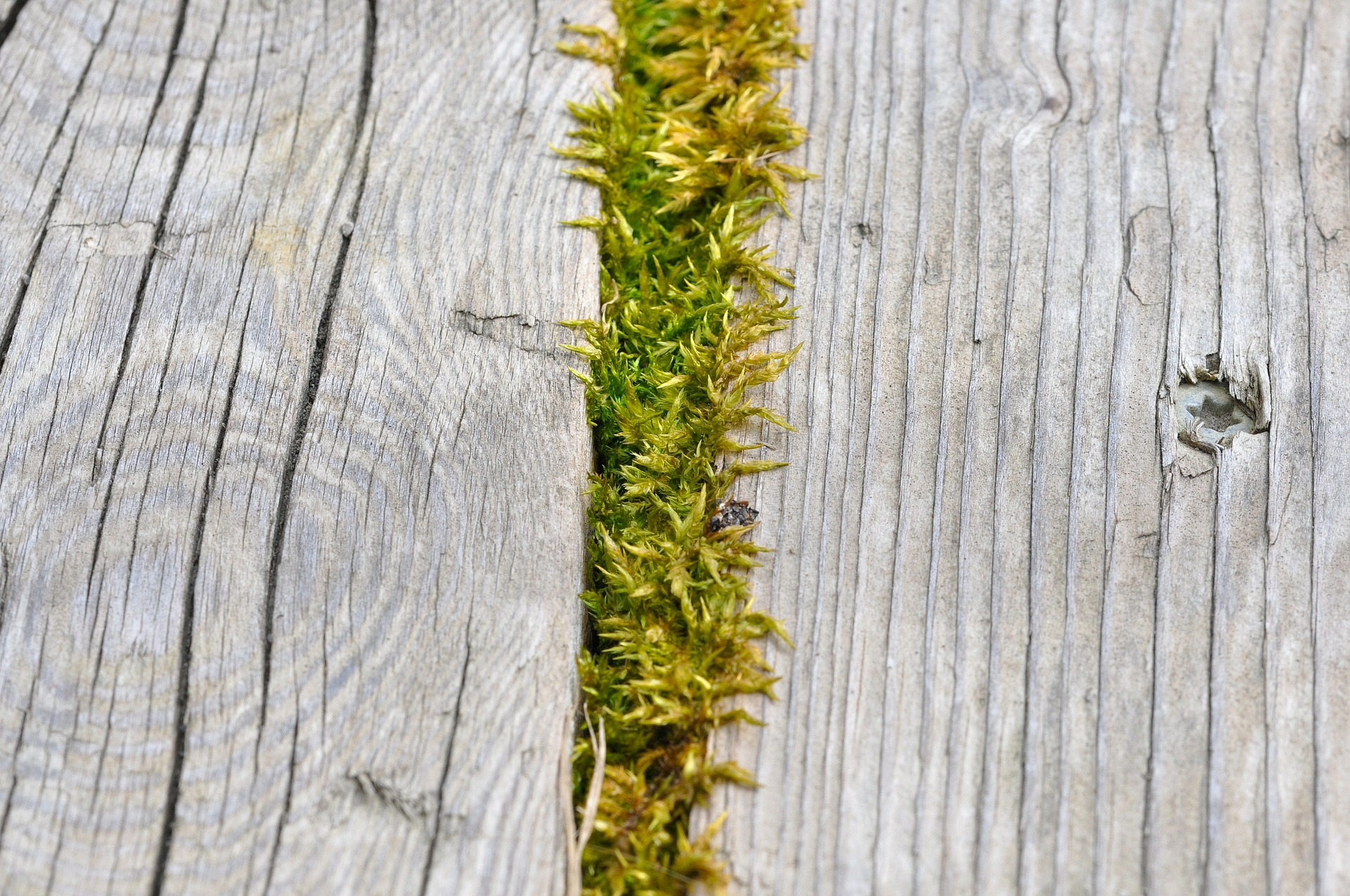 Moss, Wood, Wooden, Way, Texture, HQ Photo