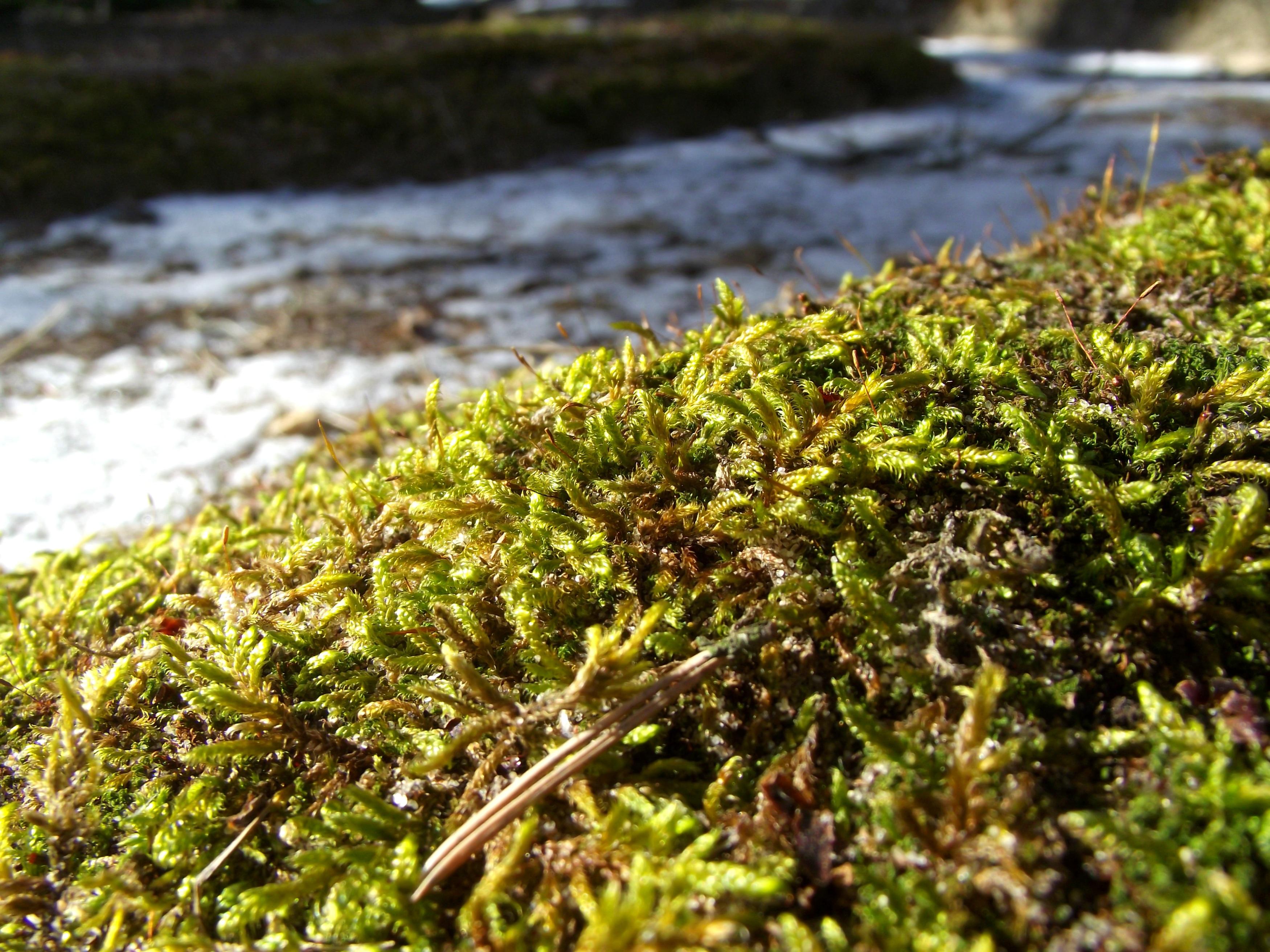 Moss, Graveyard, Moisture, Nature, Sad, HQ Photo
