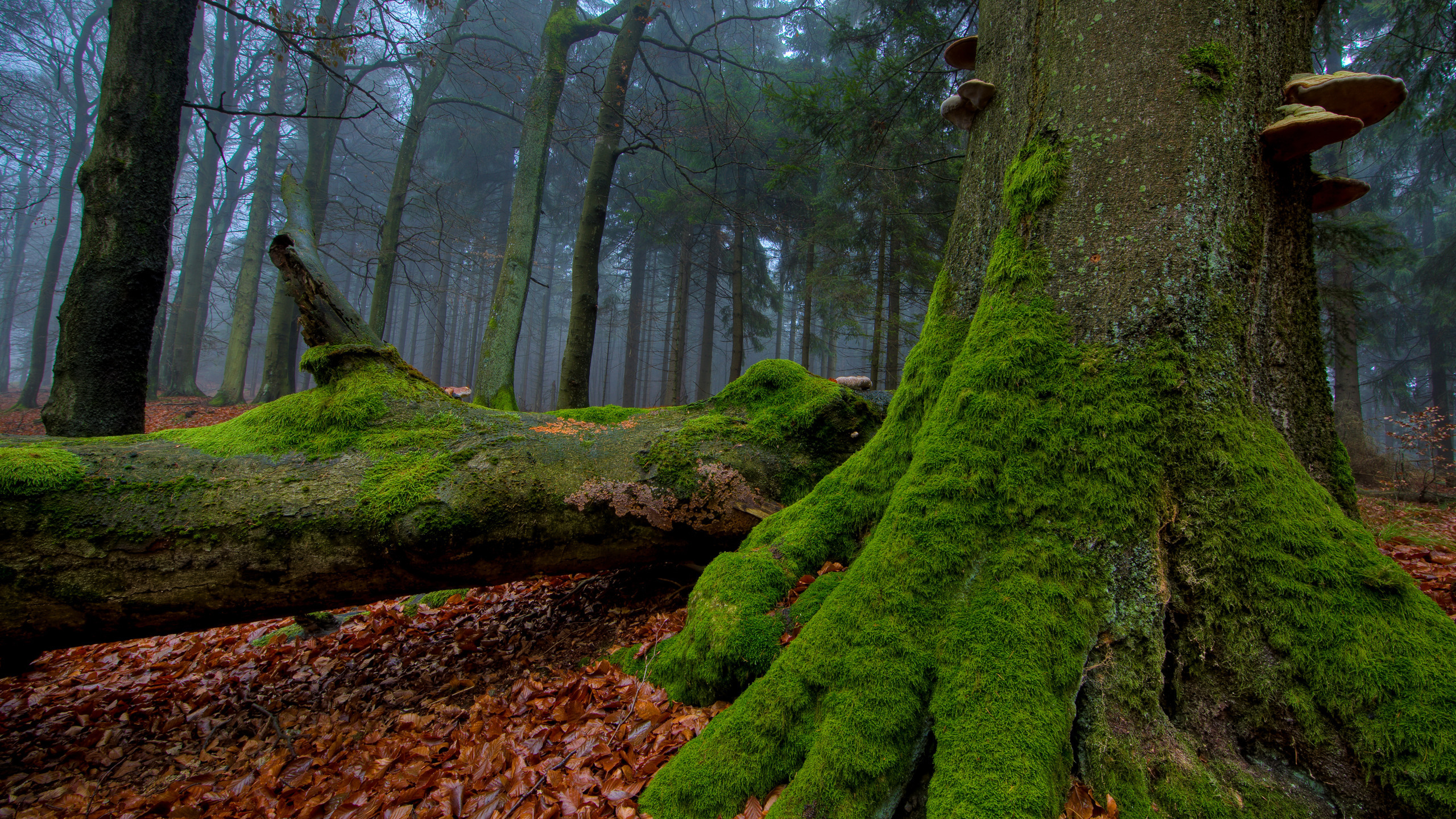 Moss on tree photo