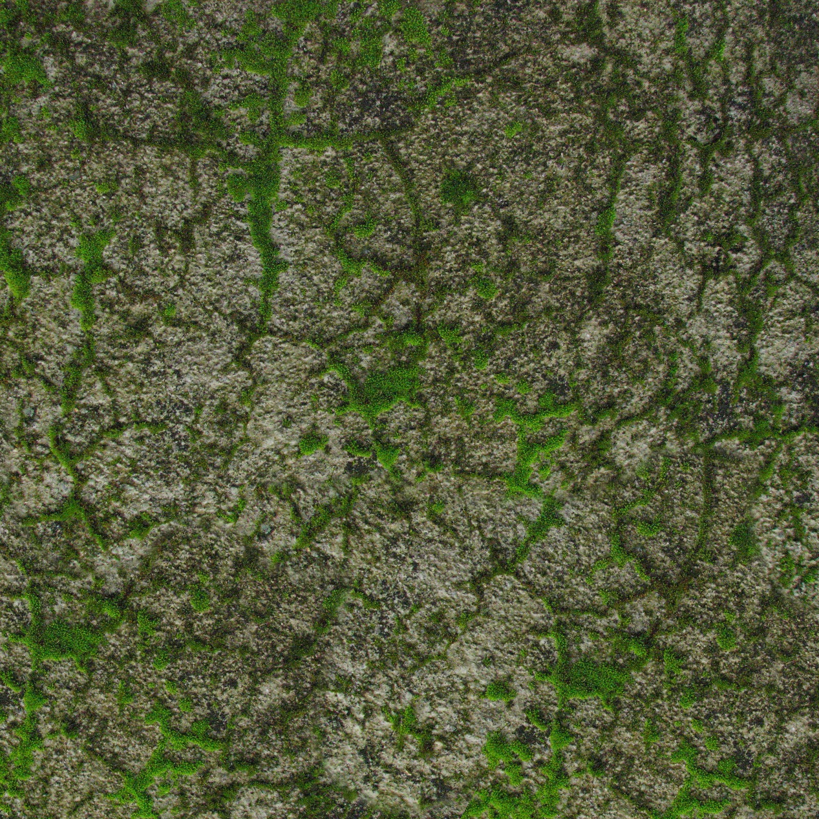 Moss texture photo