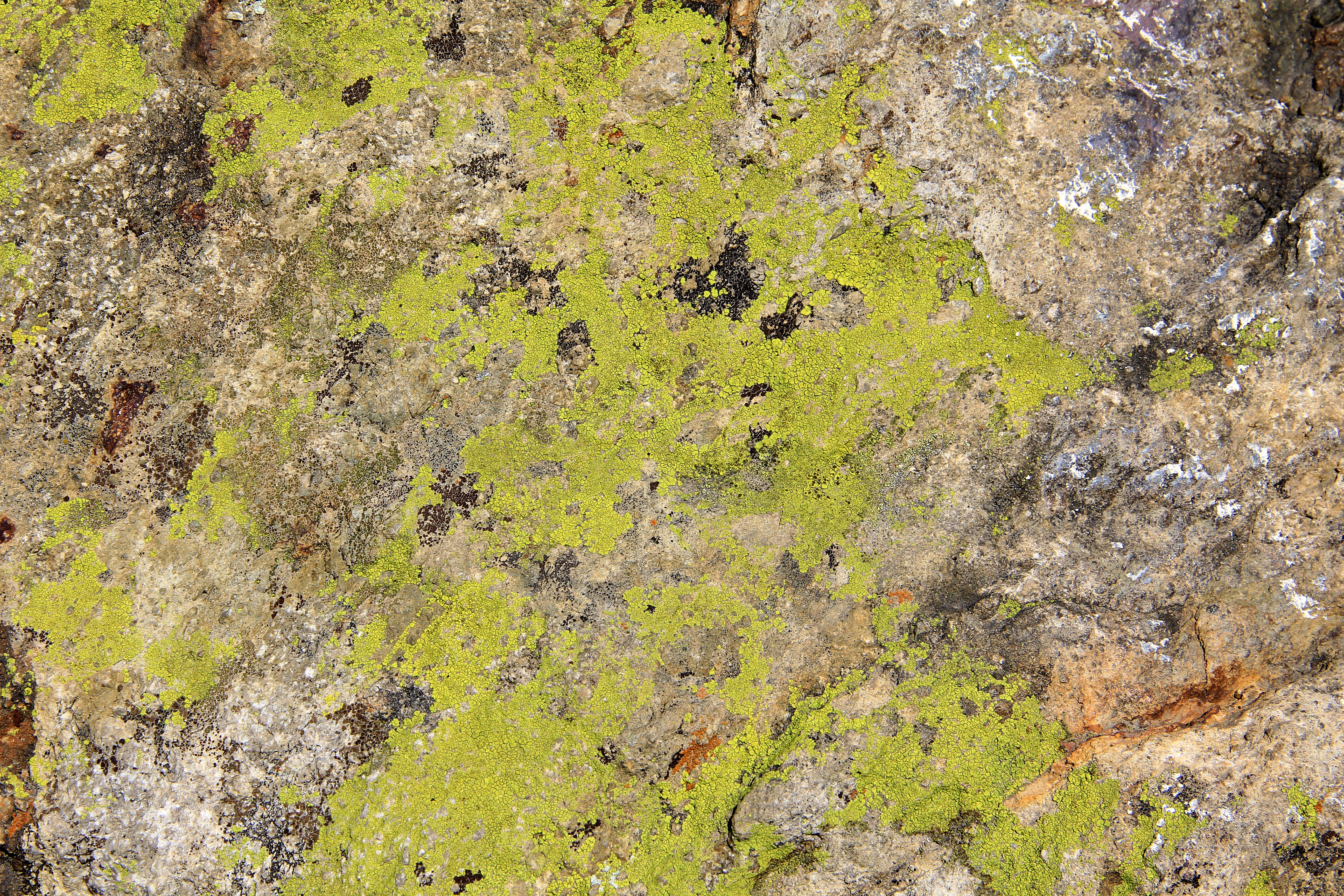 Free Photo Moss Texture Texture Plant Moss Free Download Jooinn