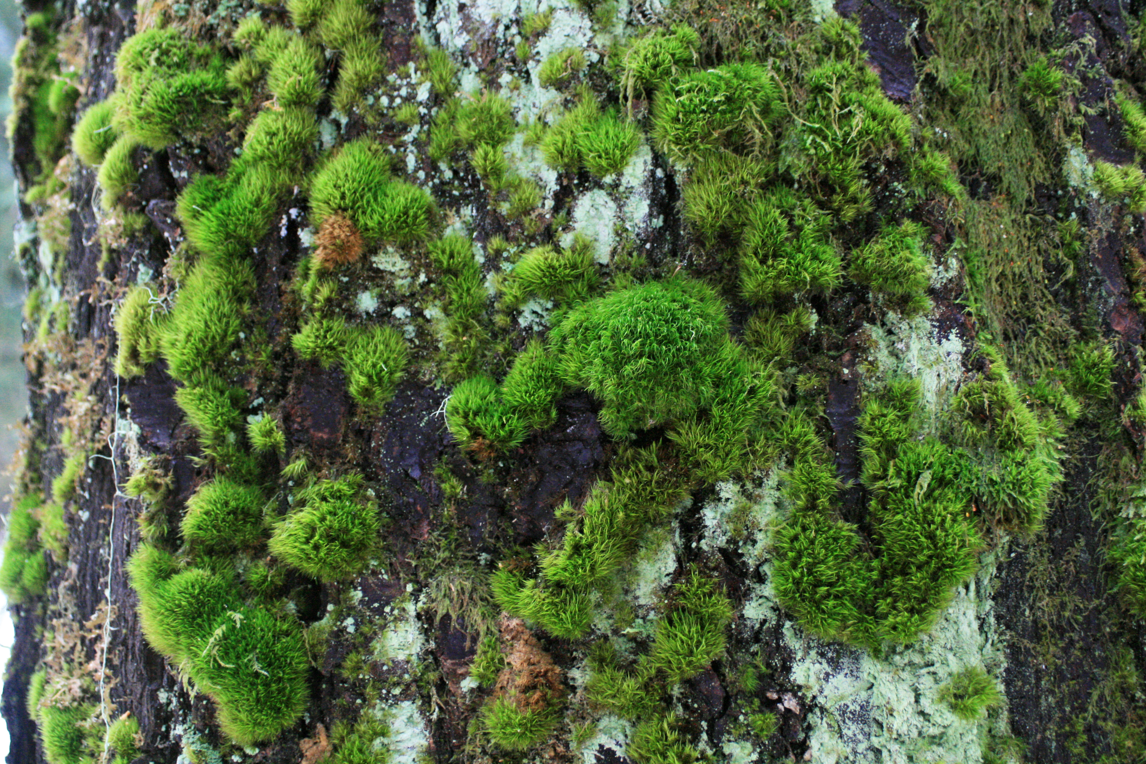 Free Textures: Pacific Northwest Forest Native PlantsCascadia Inspired