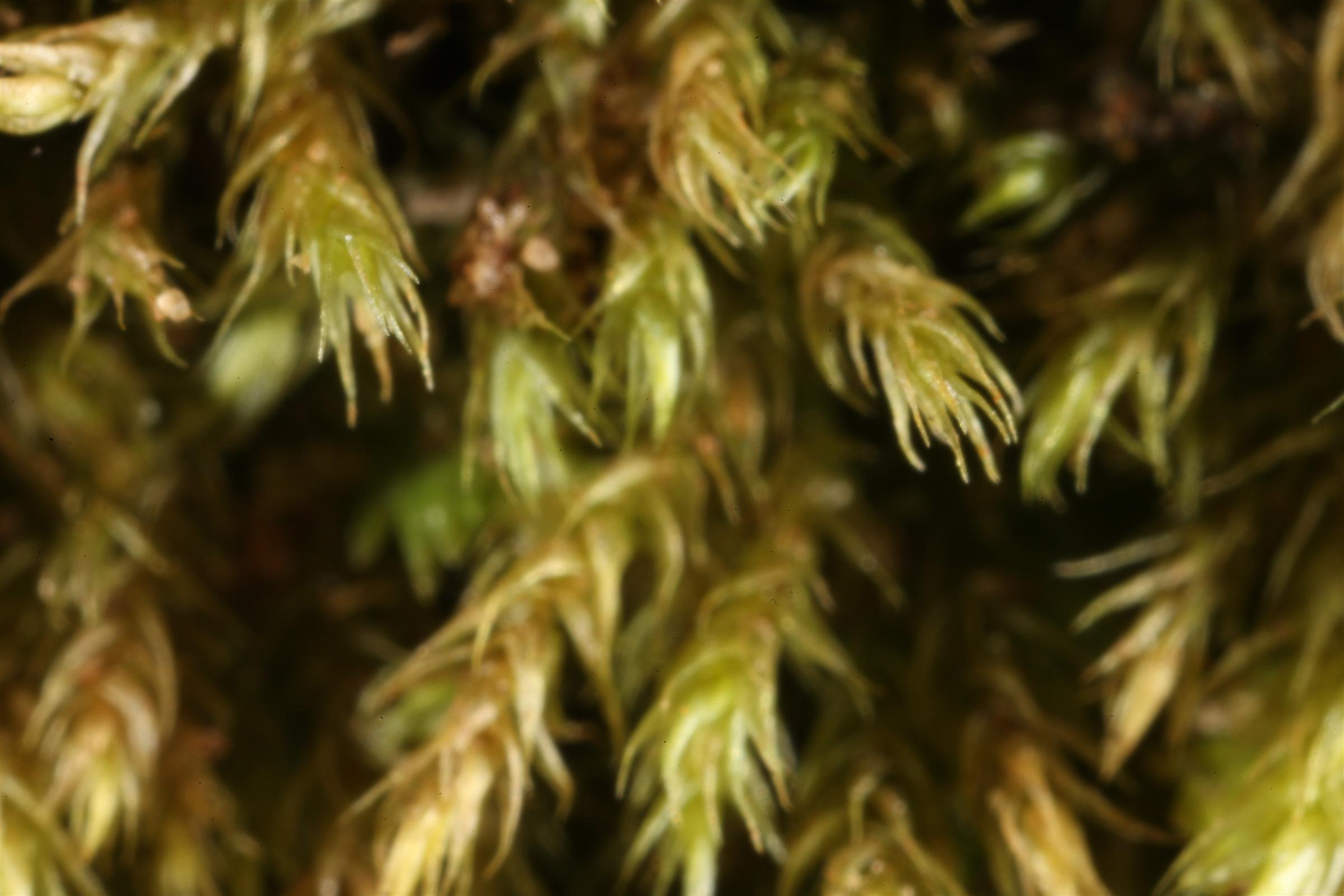 Moss texture, Close, Green, Macro, Moss, HQ Photo