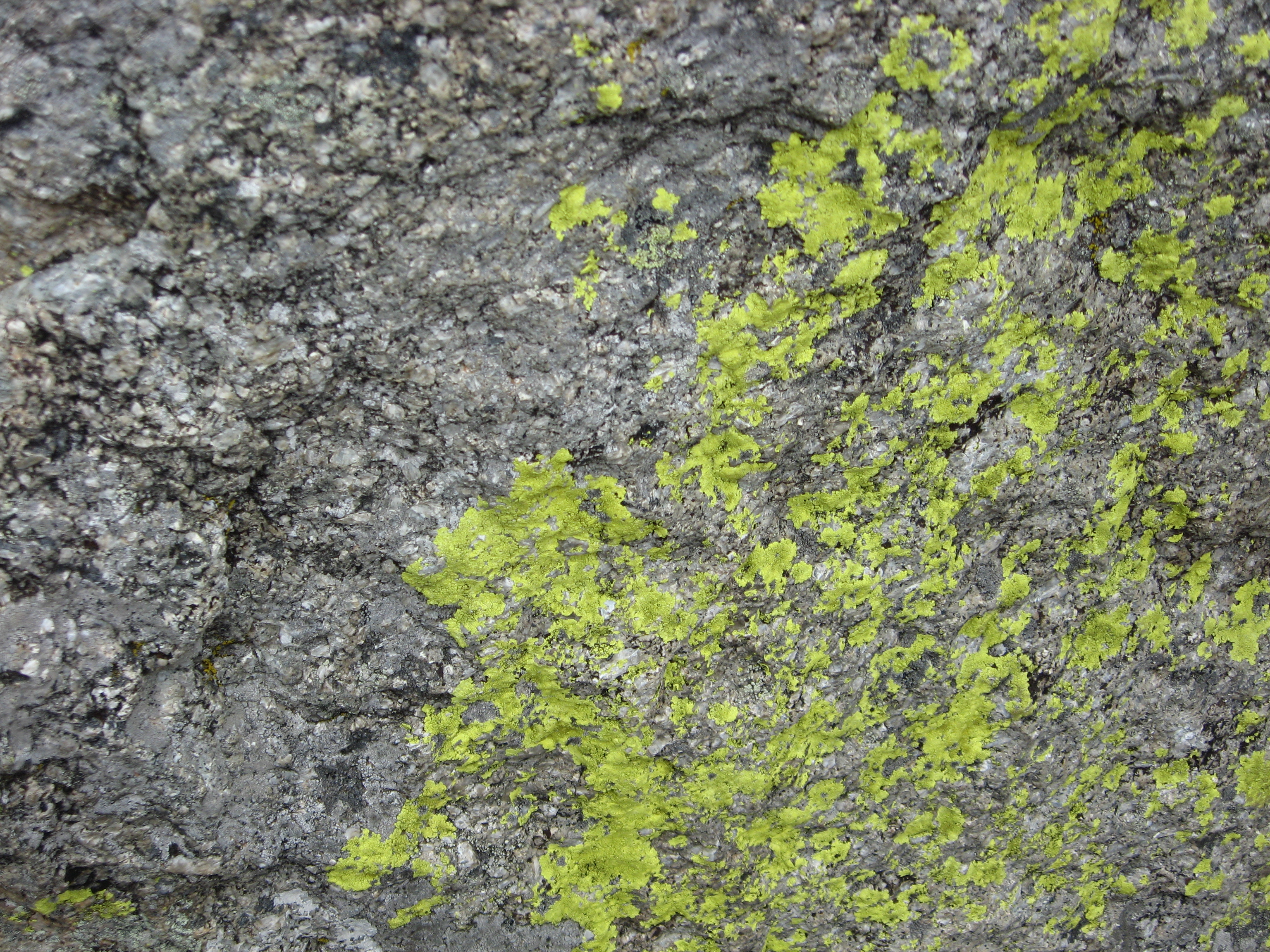 Rock with Moss Texture 1 by stock-it on DeviantArt