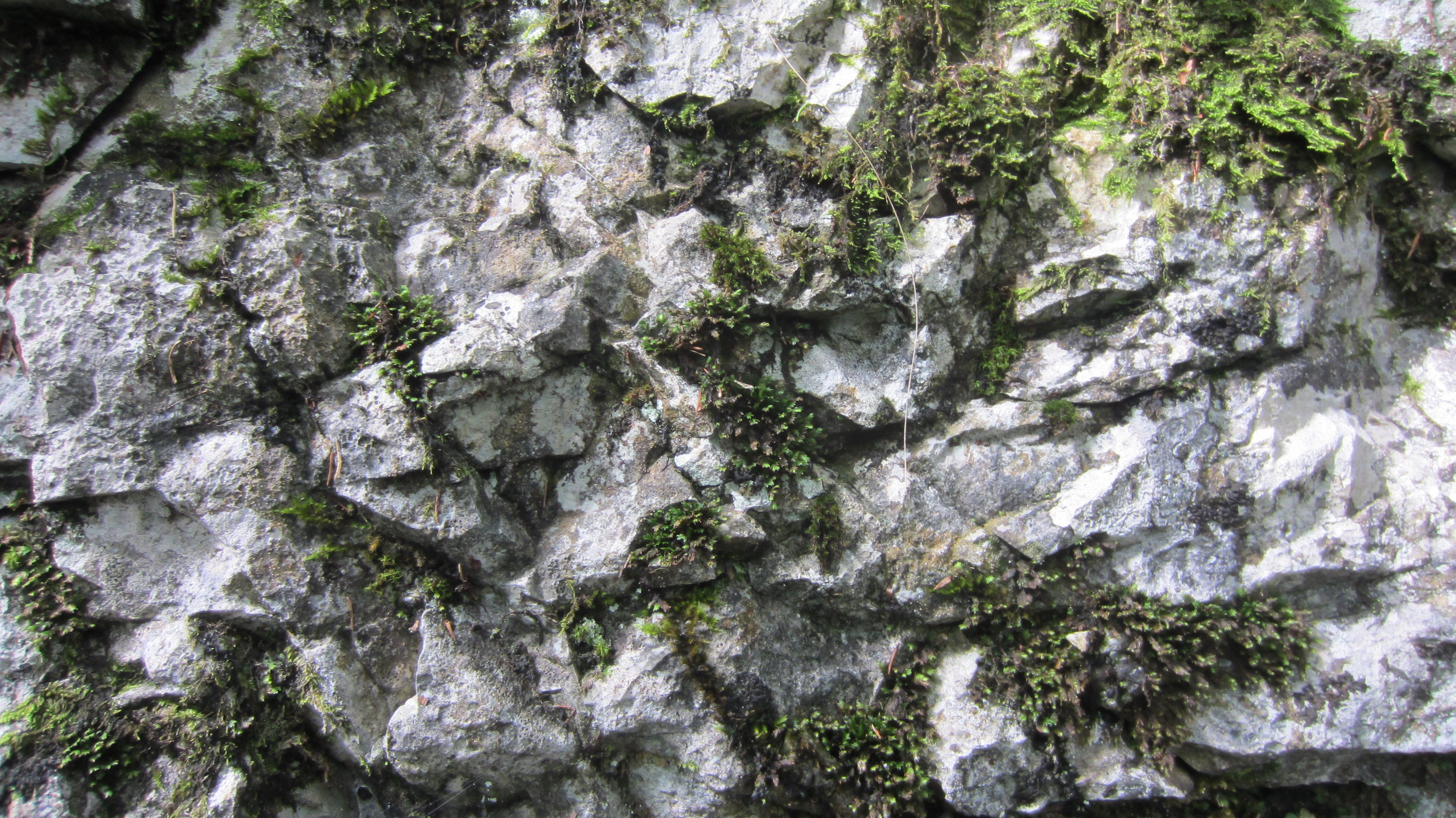rock moss texture - Google Search | Textures | Pinterest