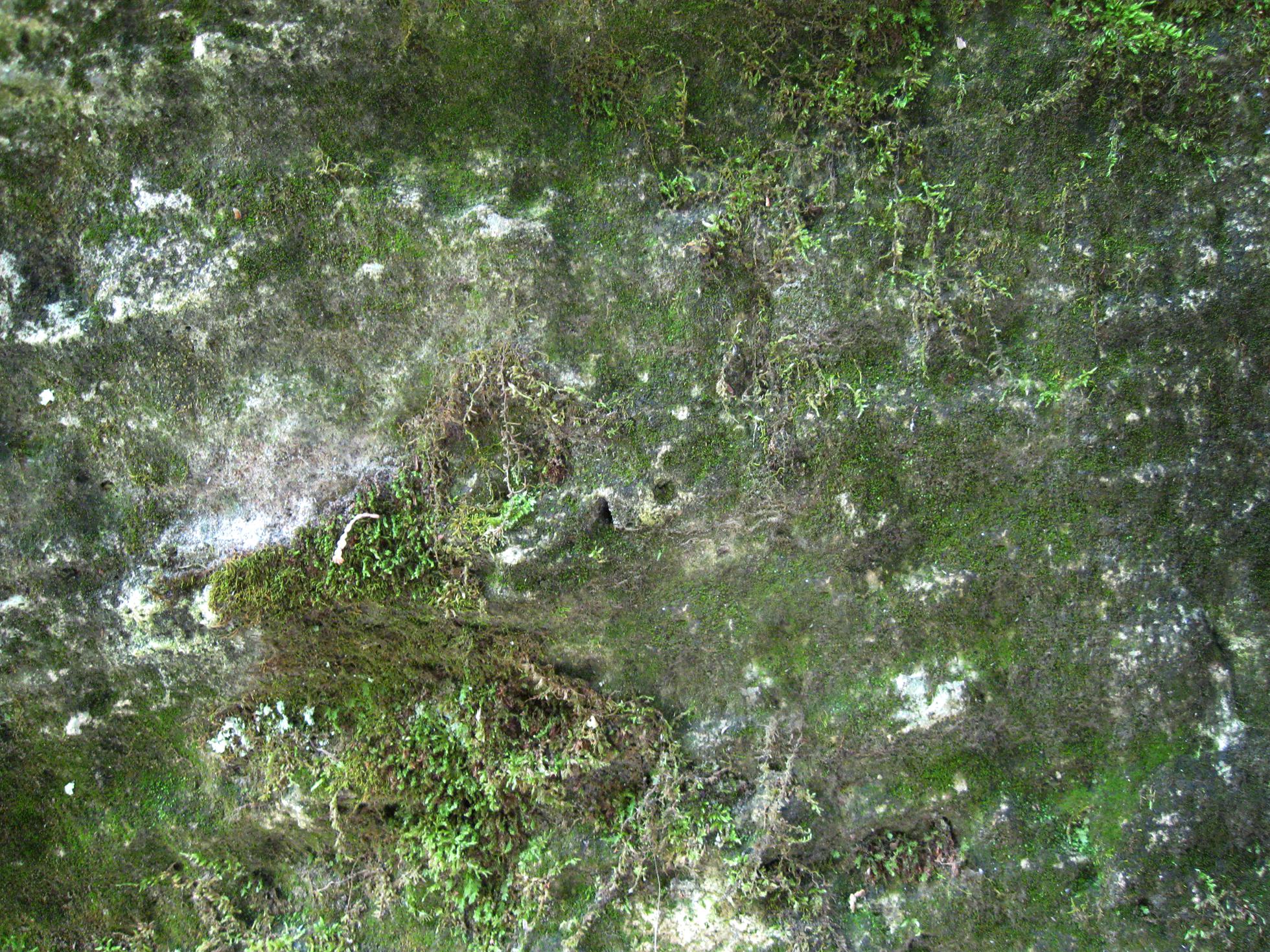 Mossy Rock by KThirteen on DeviantArt