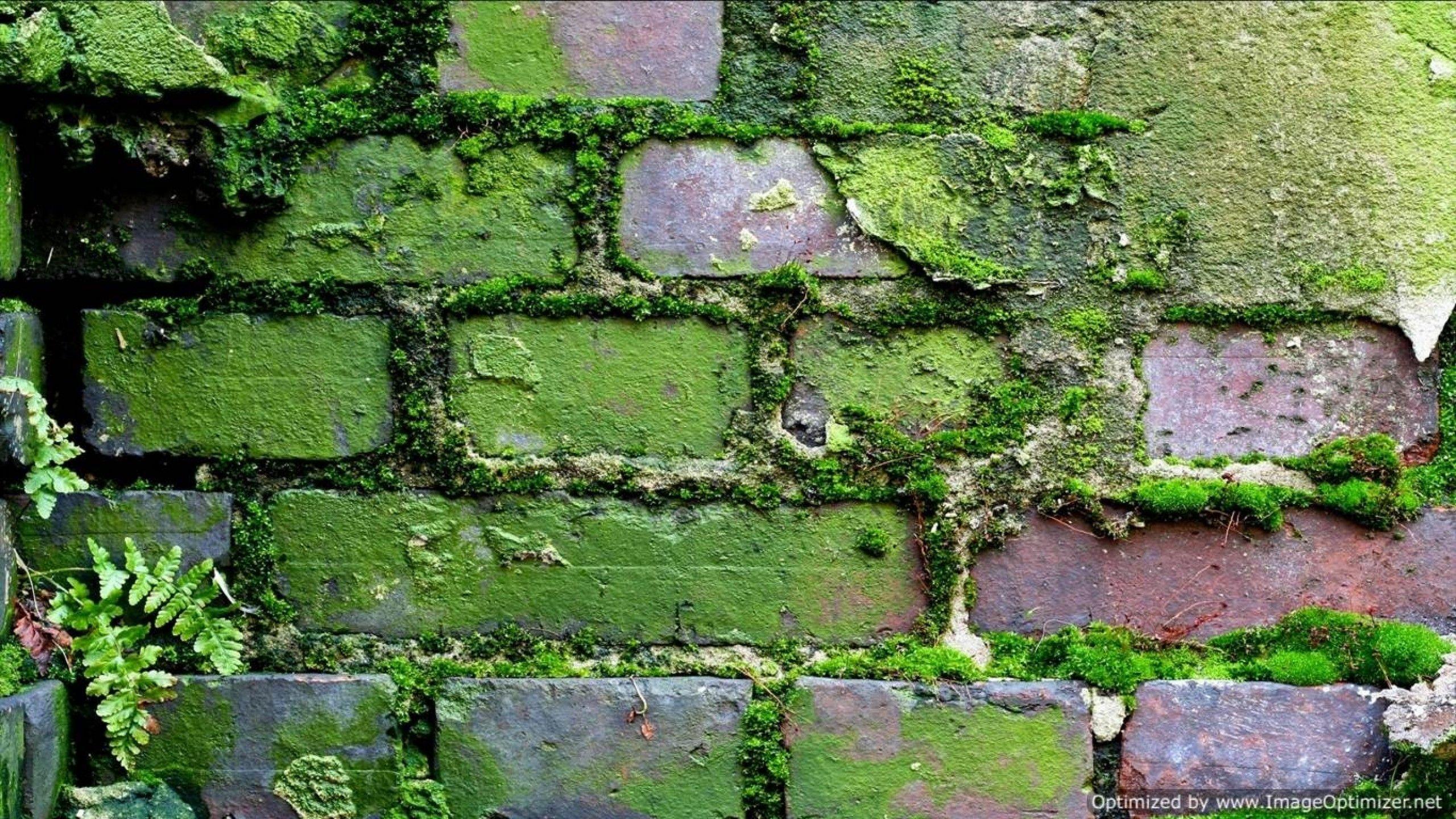 Moss Brush Photoshop wallpaper | palace castle | Pinterest ...