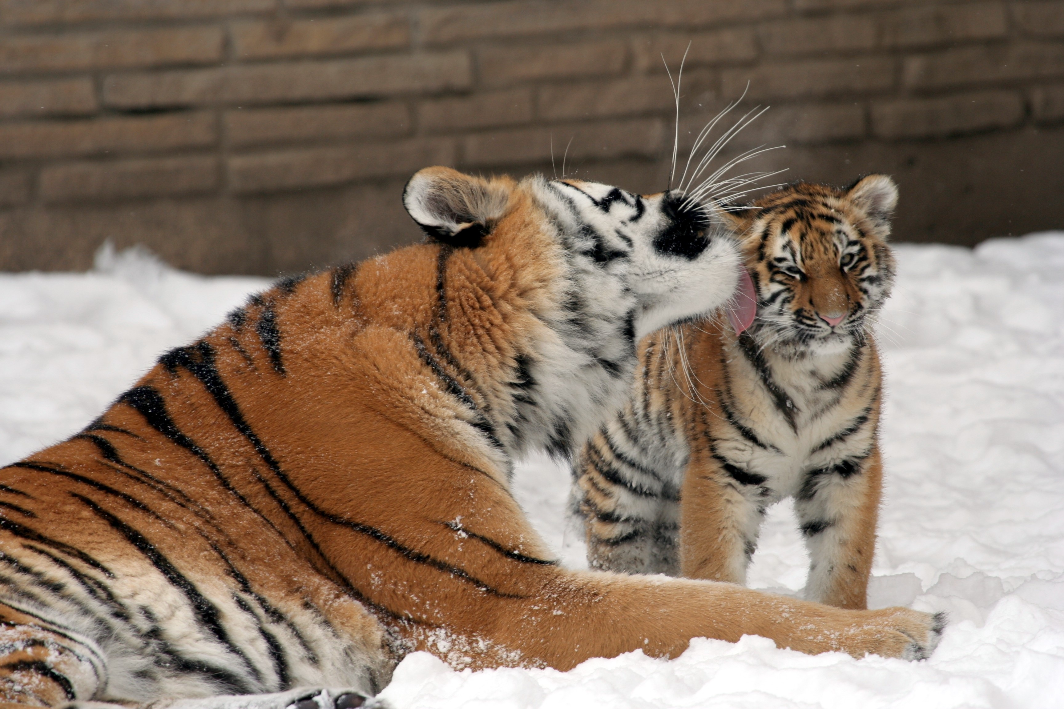 Mother with cub photo