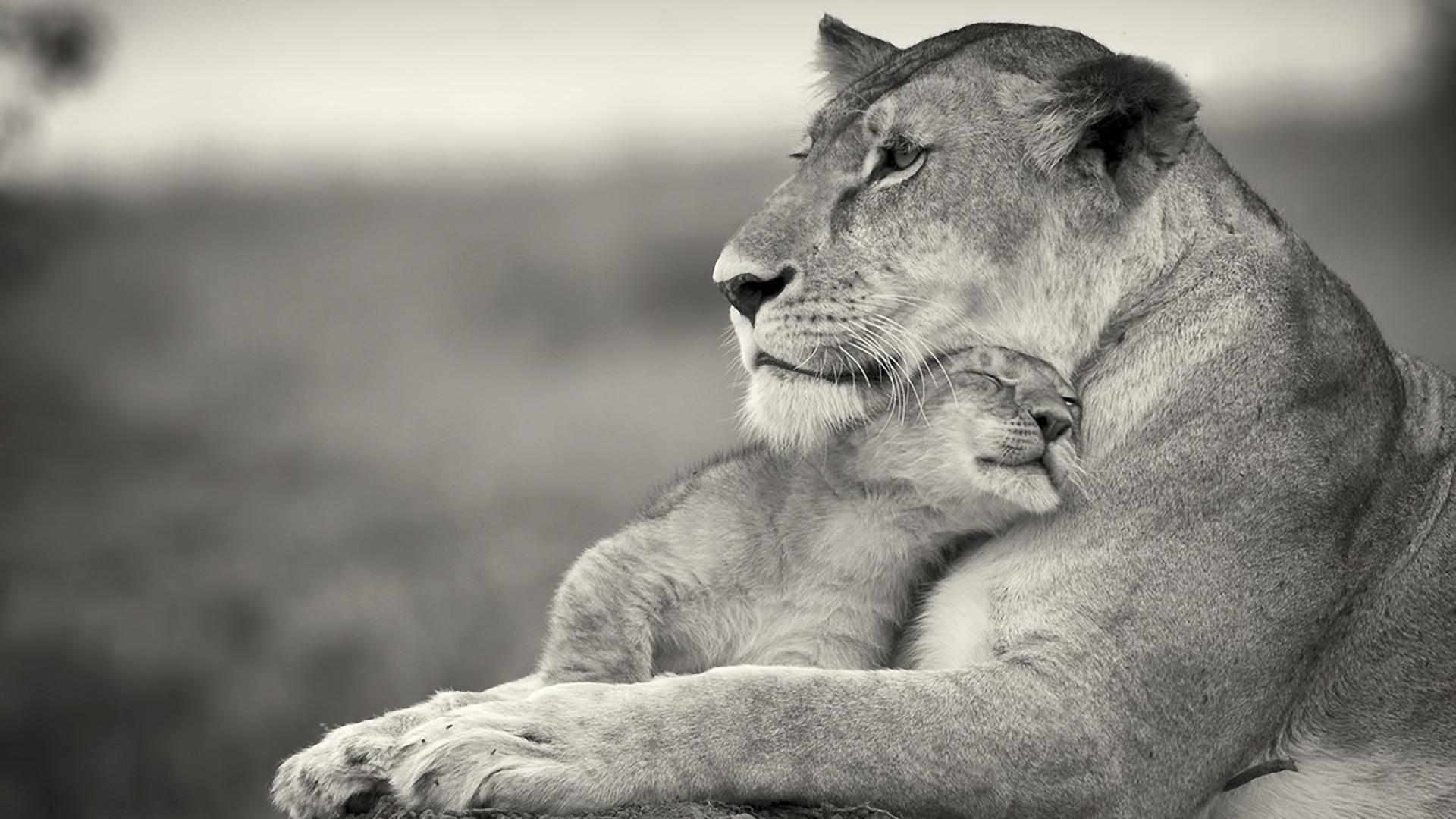 Mother's Love HD desktop wallpaper : Widescreen : High Definition ...