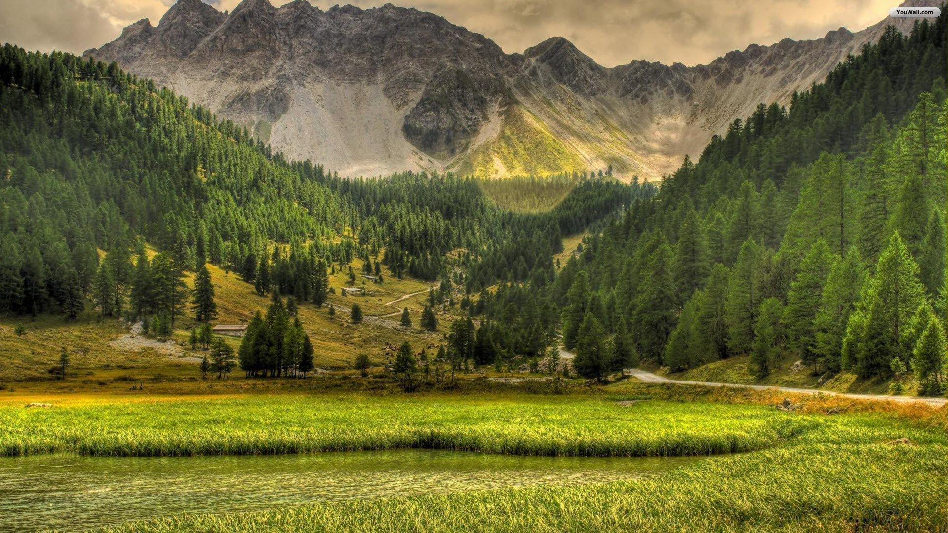 Mountain Forest High Definition Wallpaper 25754 - Baltana